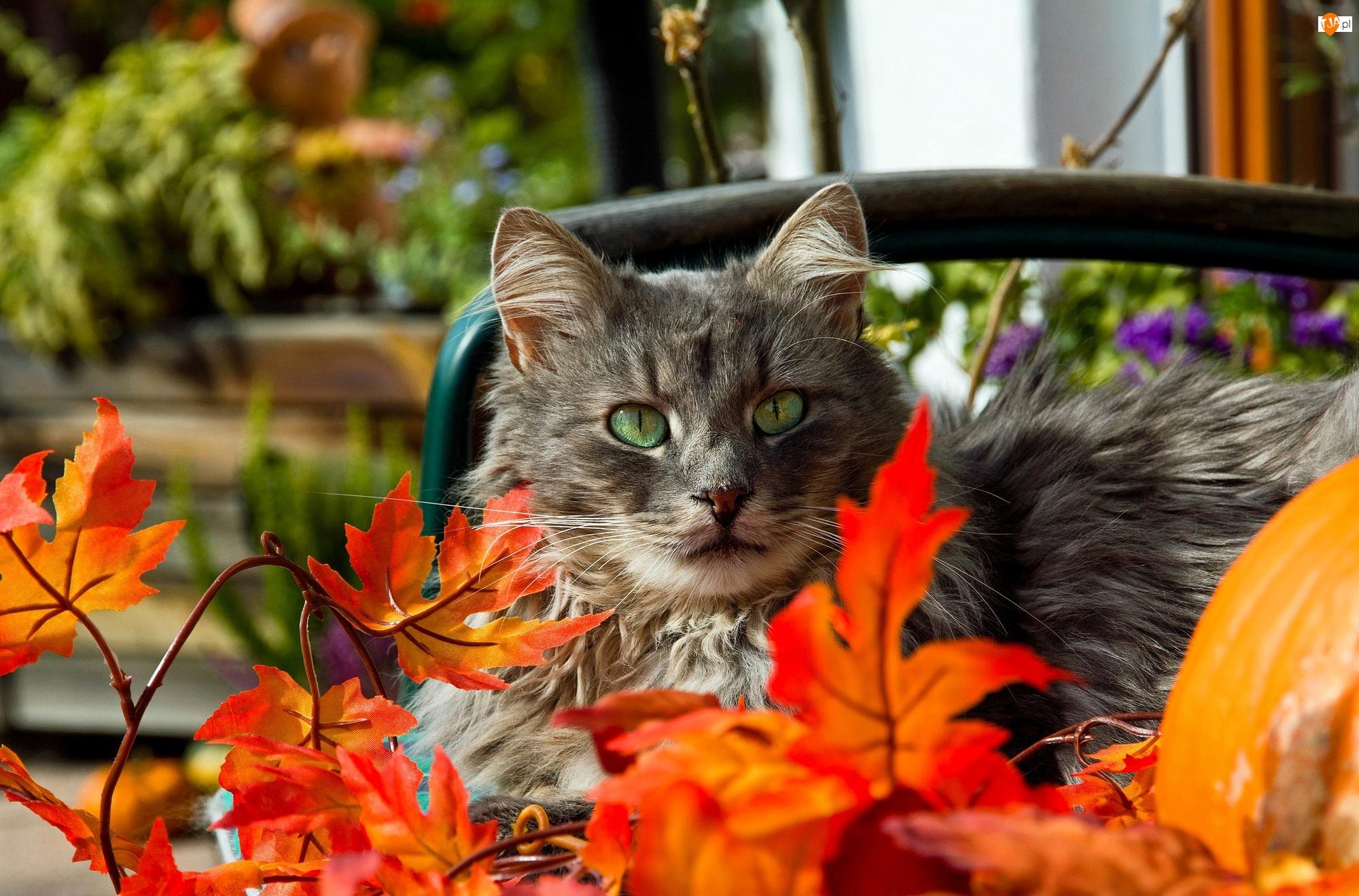 Liście, Kot, Jesienne