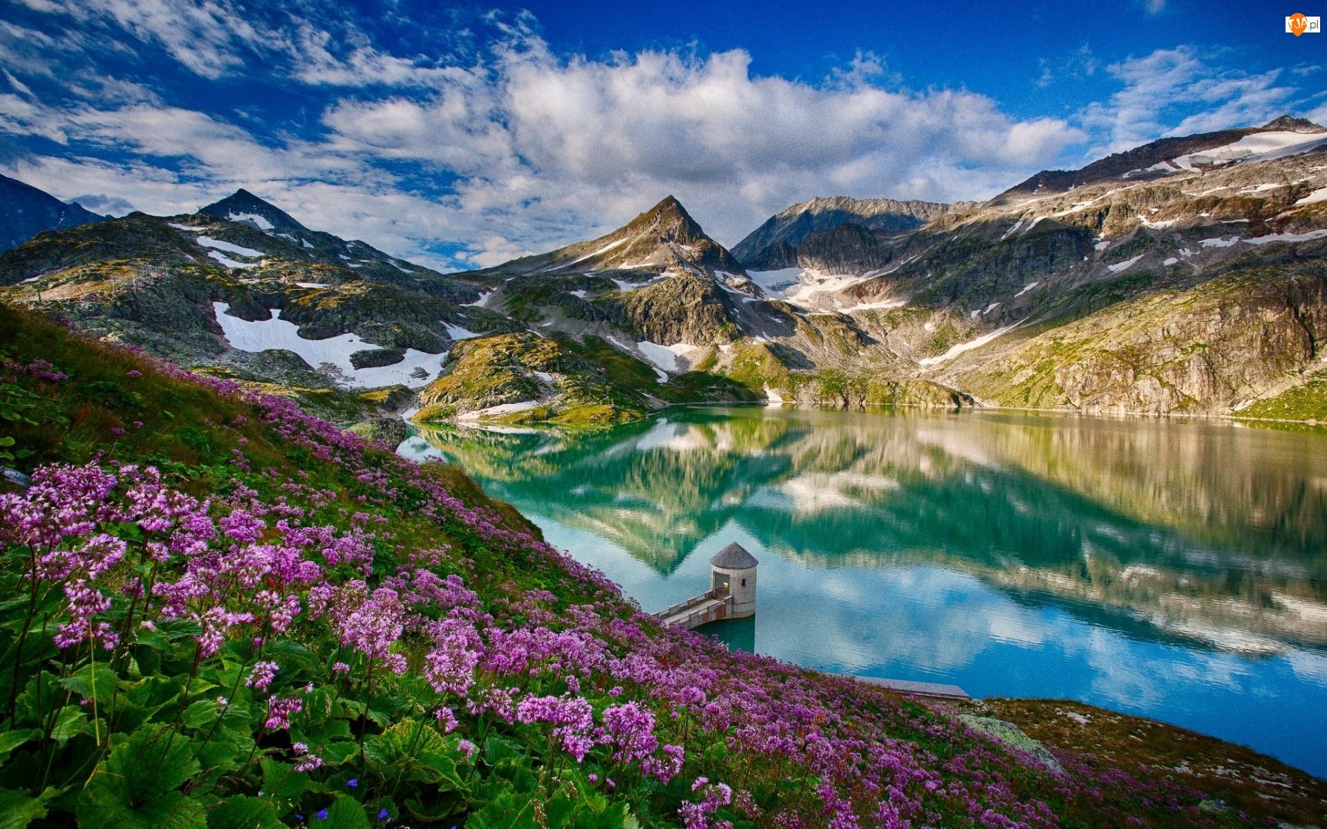 Góry, Kwiaty, Jezioro, Różowe