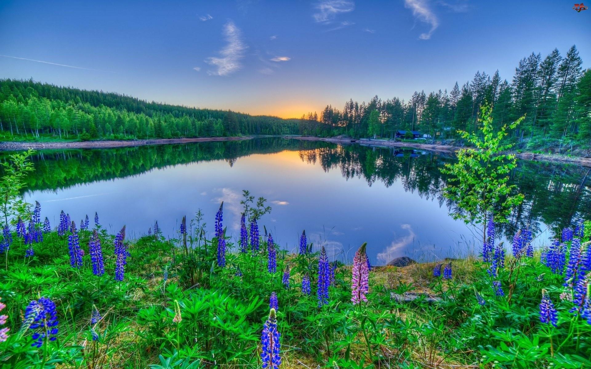 Jezioro, Łubiny