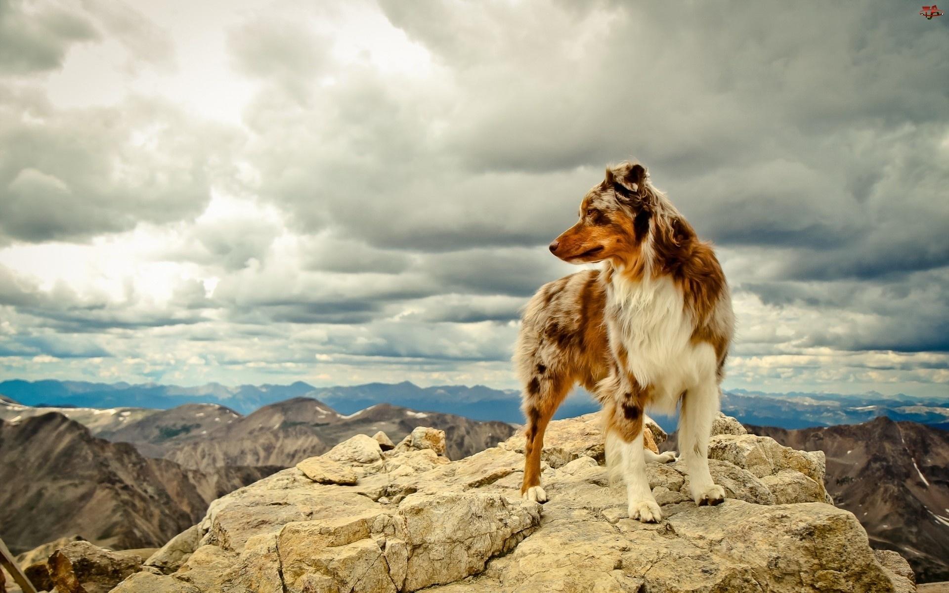 Góry, pies pasterski, Niebo, Australijski