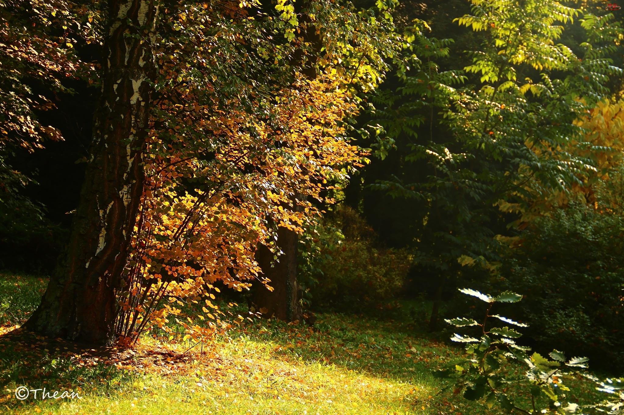 Liście, Jesień, Brzoza, Drzewa, Kolorowe