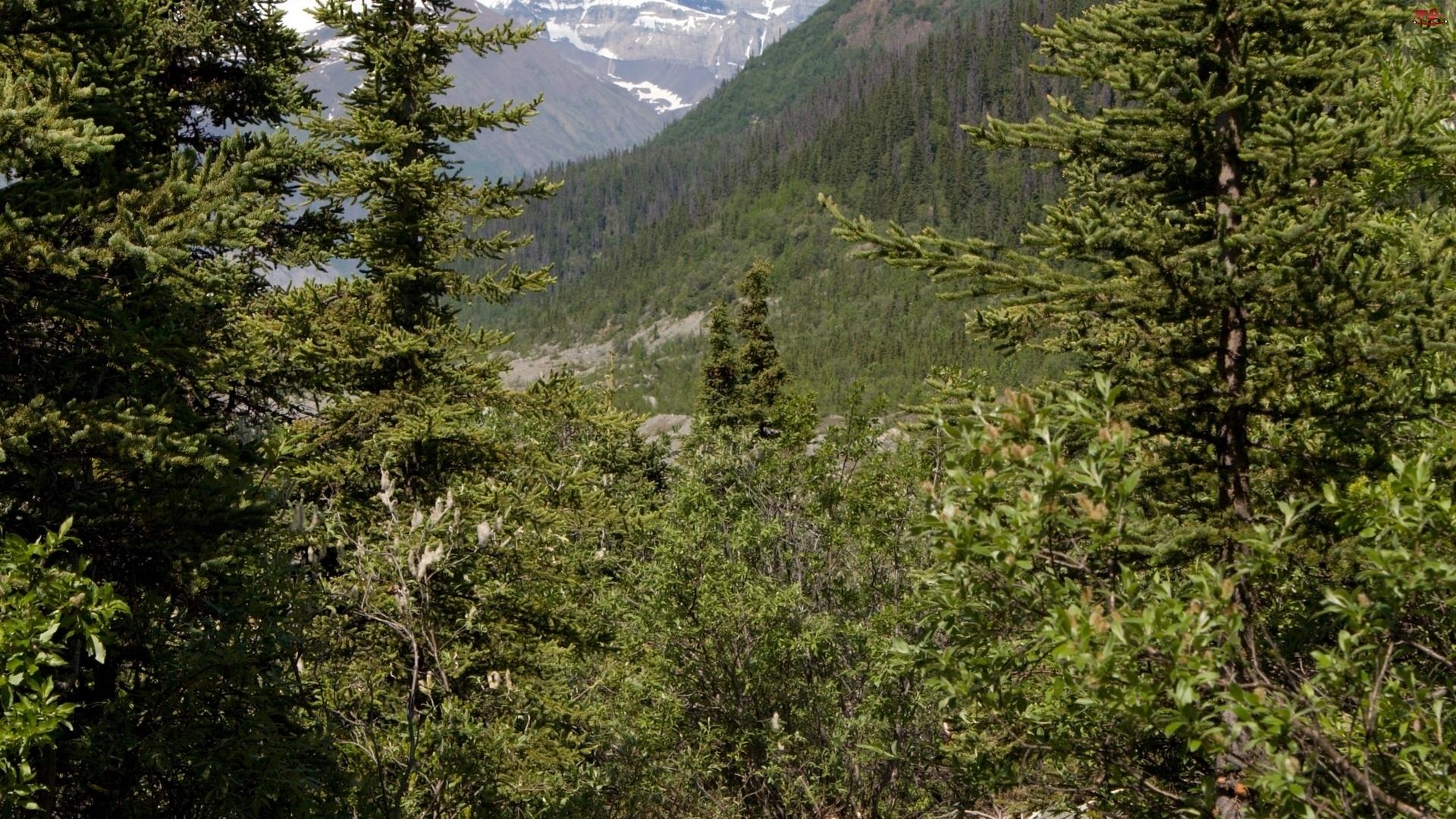 Drzewa, Góry, Las