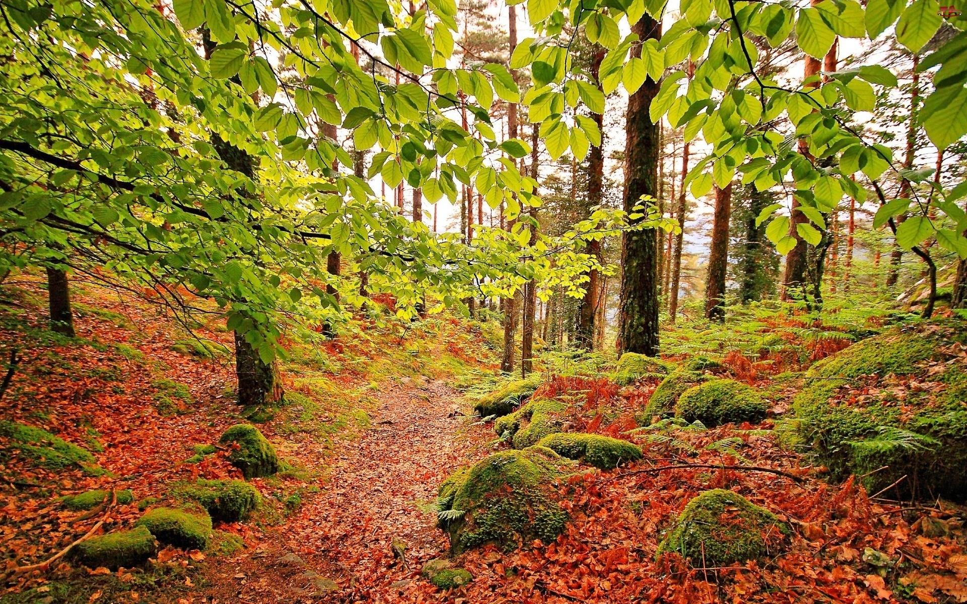 Jesień, Las, Kamienie, Ścieżka, Liście