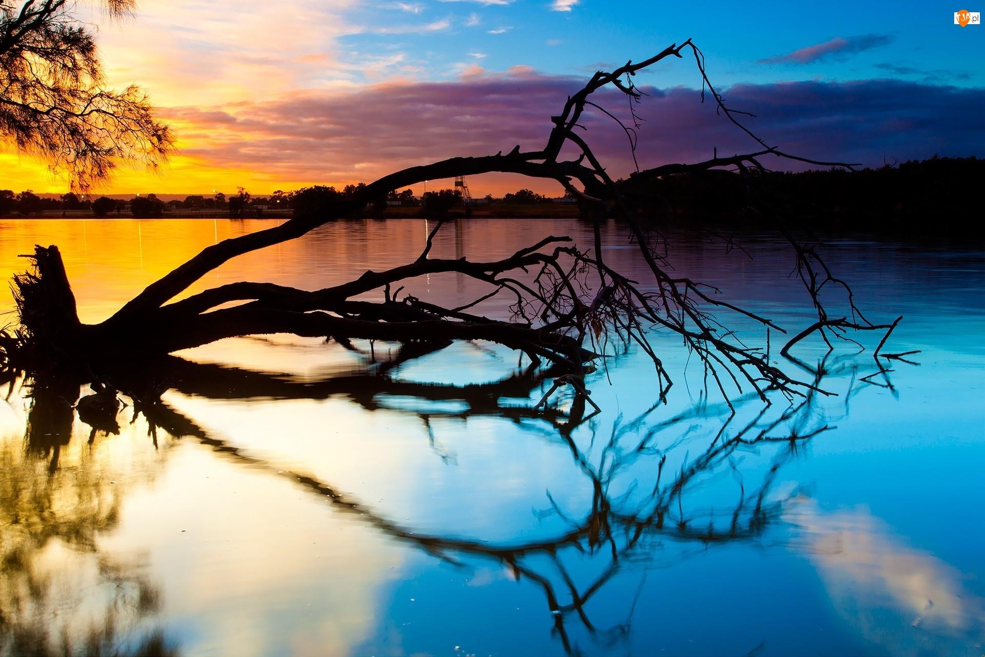 Drzewo, Zachód, Jezioro, Słońca, Powalone