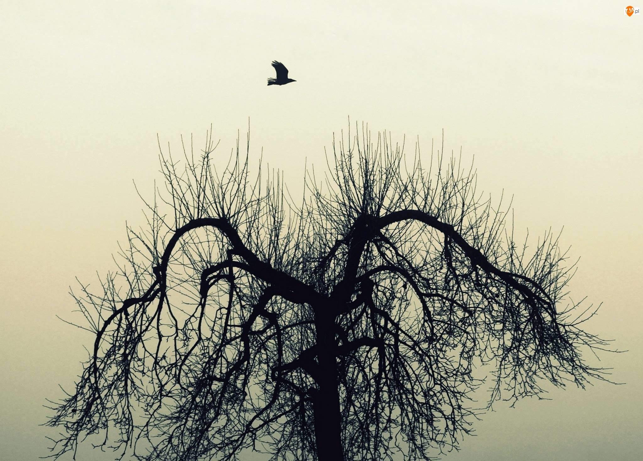 Drzewo, Ptak