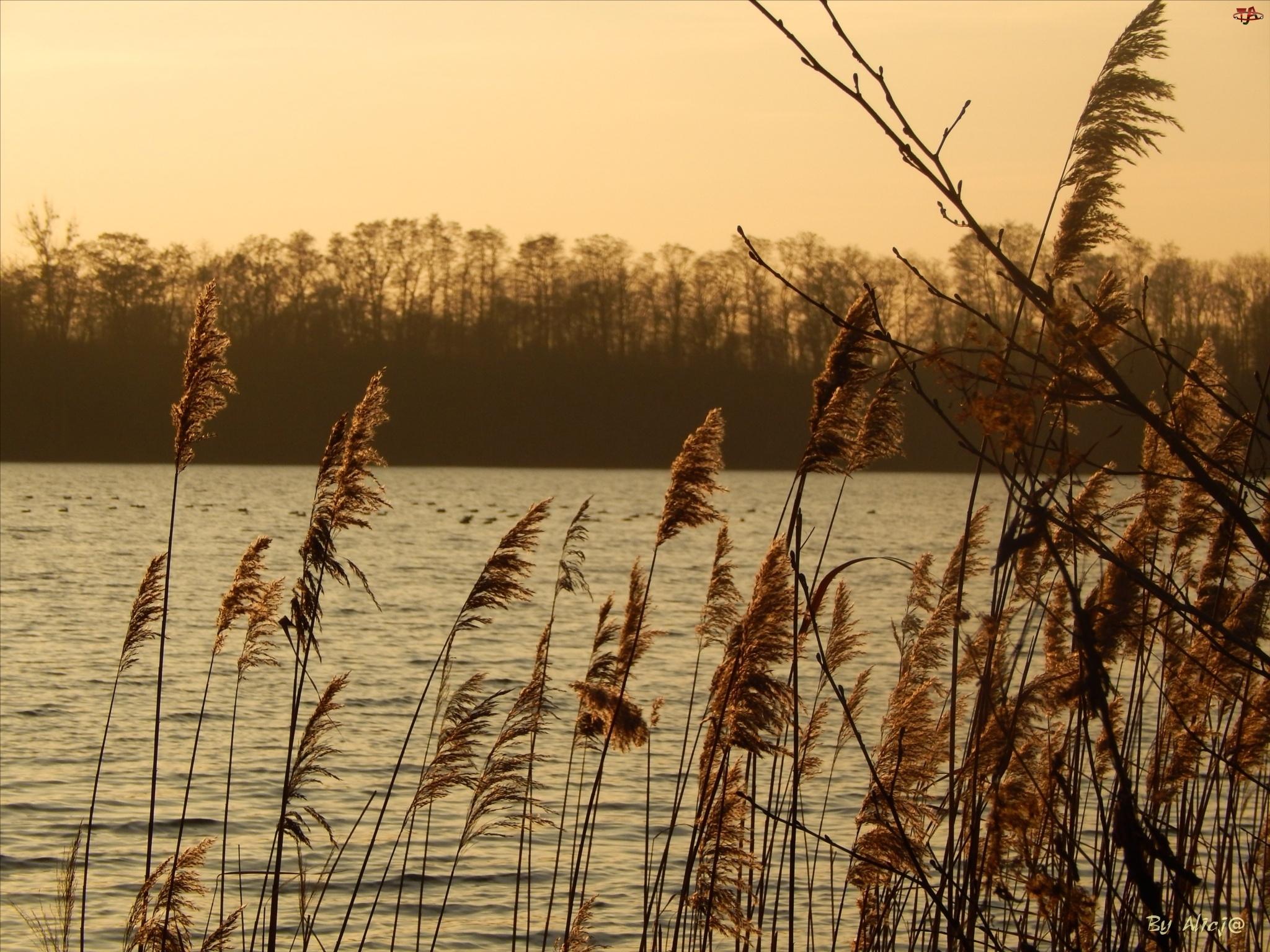 Jezioro, Słońca, Trzcina, Zachód