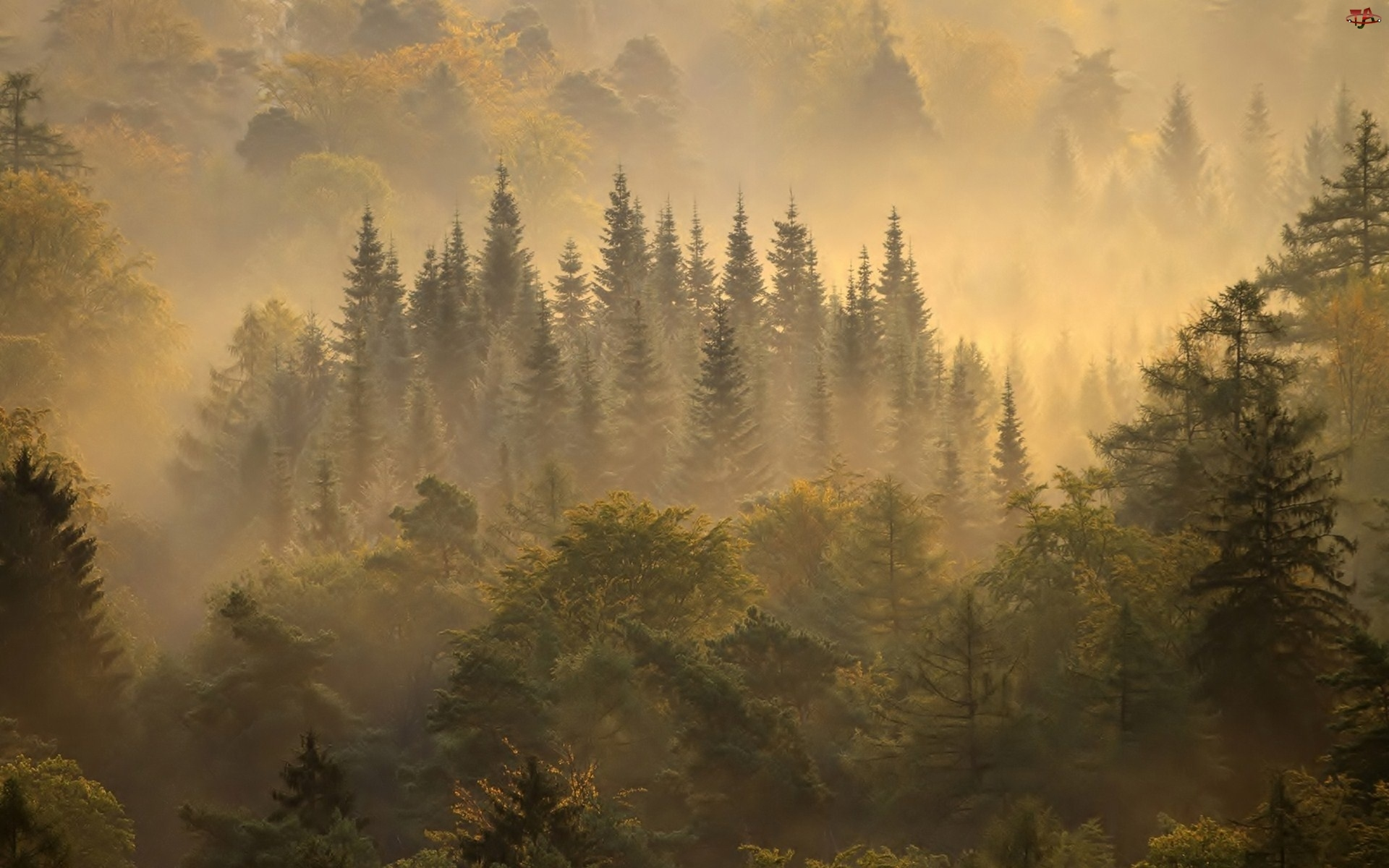 Las, Mgła
