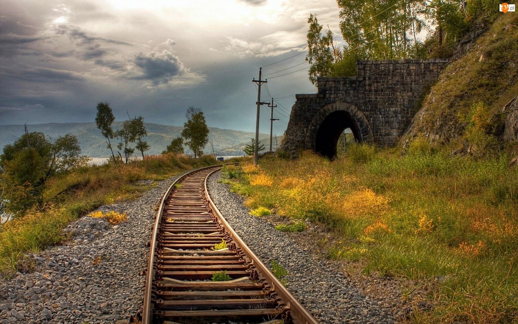 Tor, Rośliny, Kolejowy, Tunel