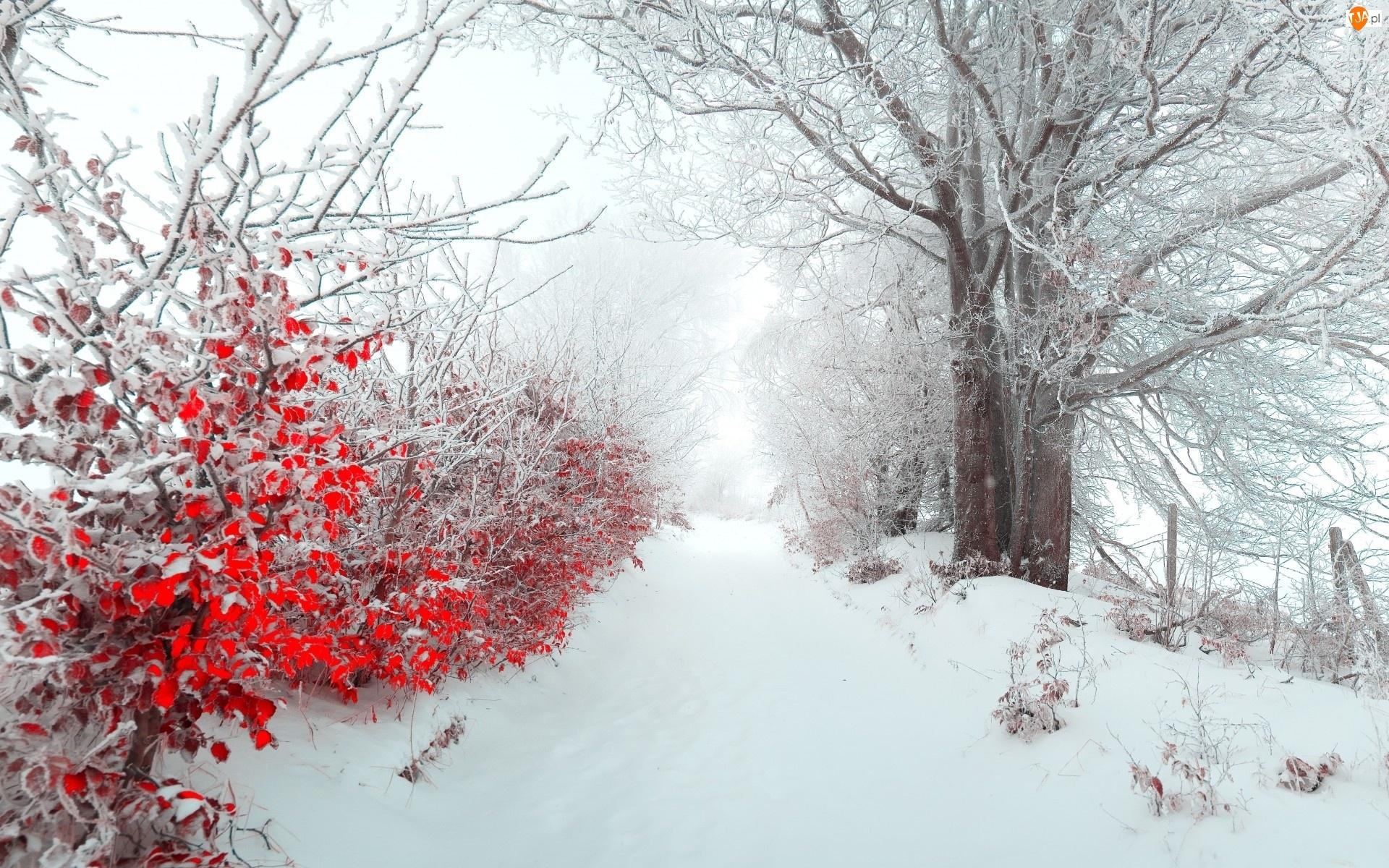 Drzewa, Droga, Śnieg