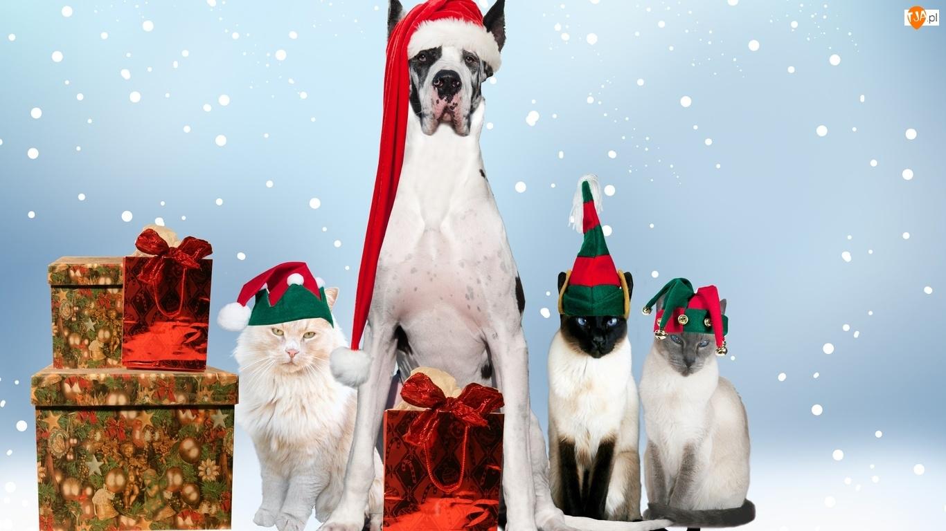 Boże, Prezenty, Pies, Czapki, Koty, Narodzenie
