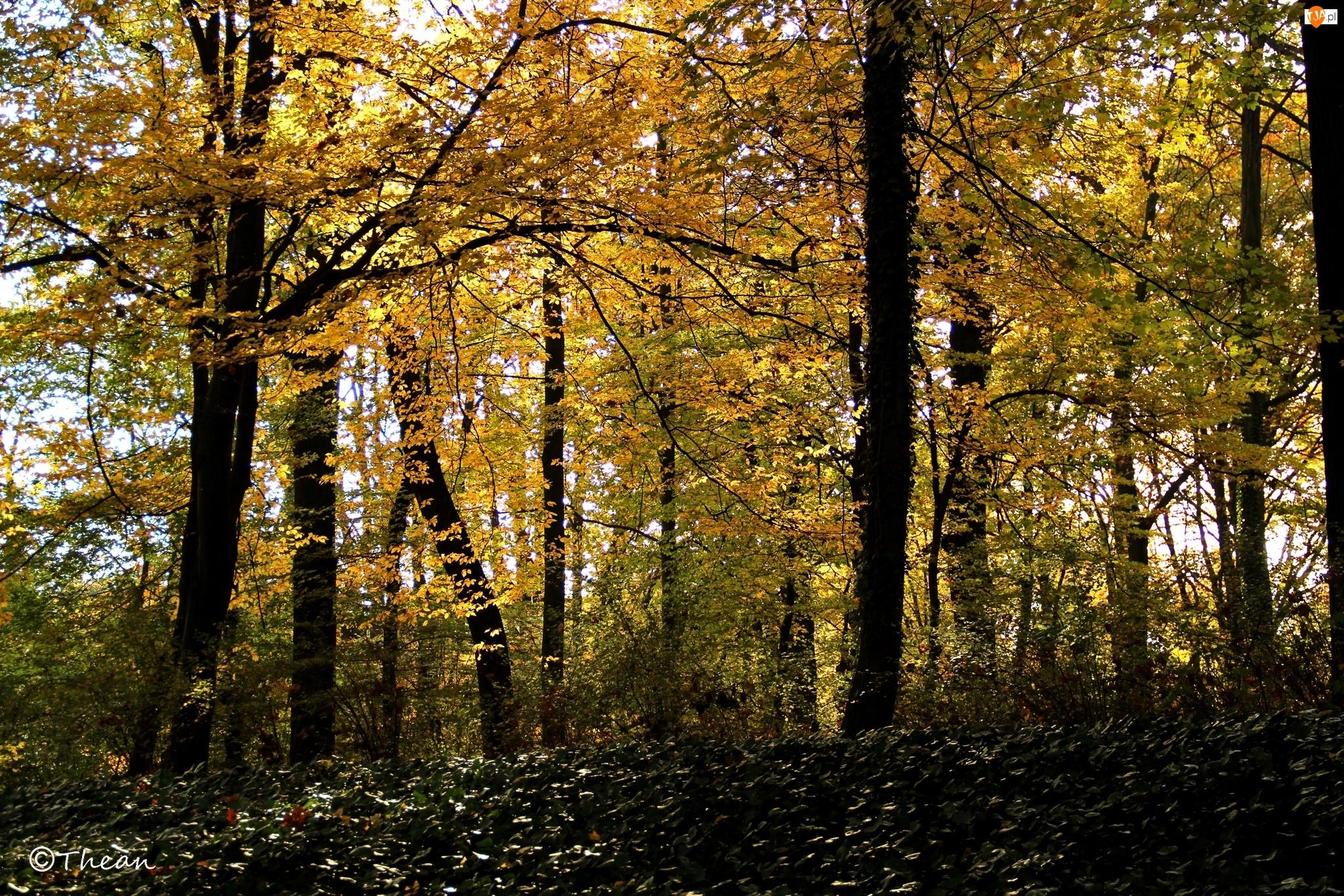 Jesień, Park, Liście, Żółte, Drzewa