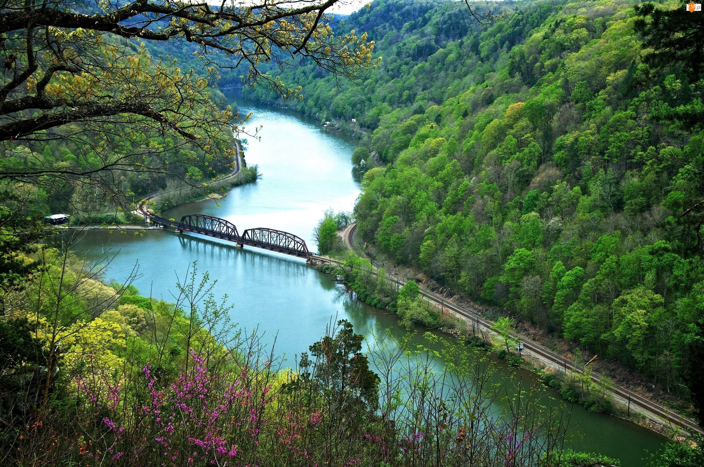 Lasy, Kolejowy, Rzeka, Most