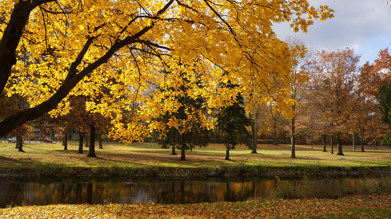 Rzeczka, Park, Drzewa