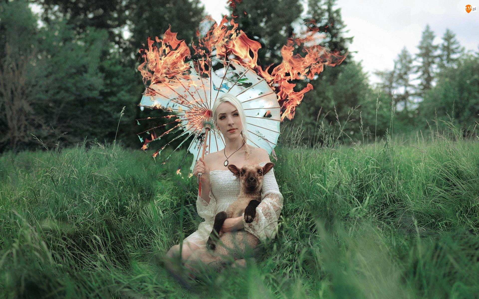 Owieczka, Parasol, Kobieta, Trawy, Blondynka, Płonący