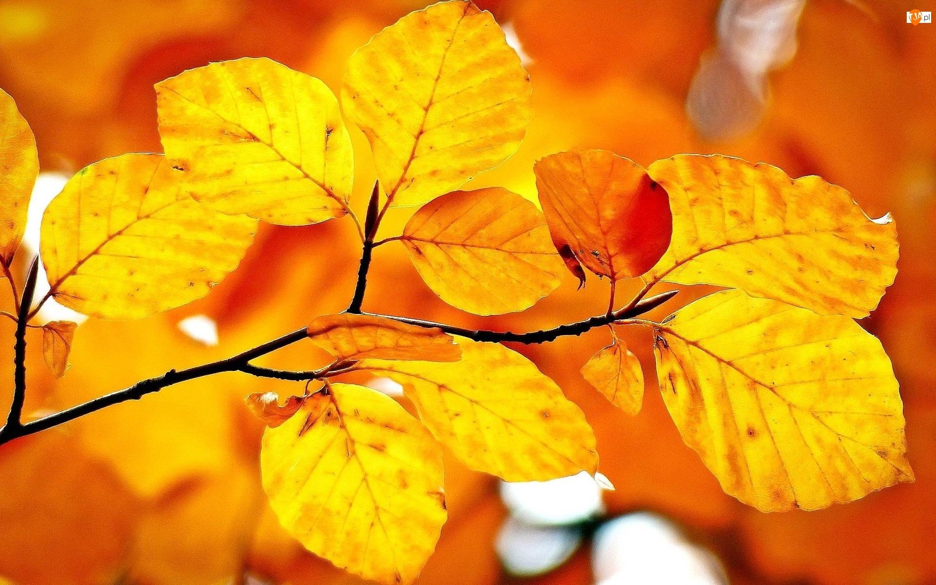 Gałąz, Jesień, Liście, Światło