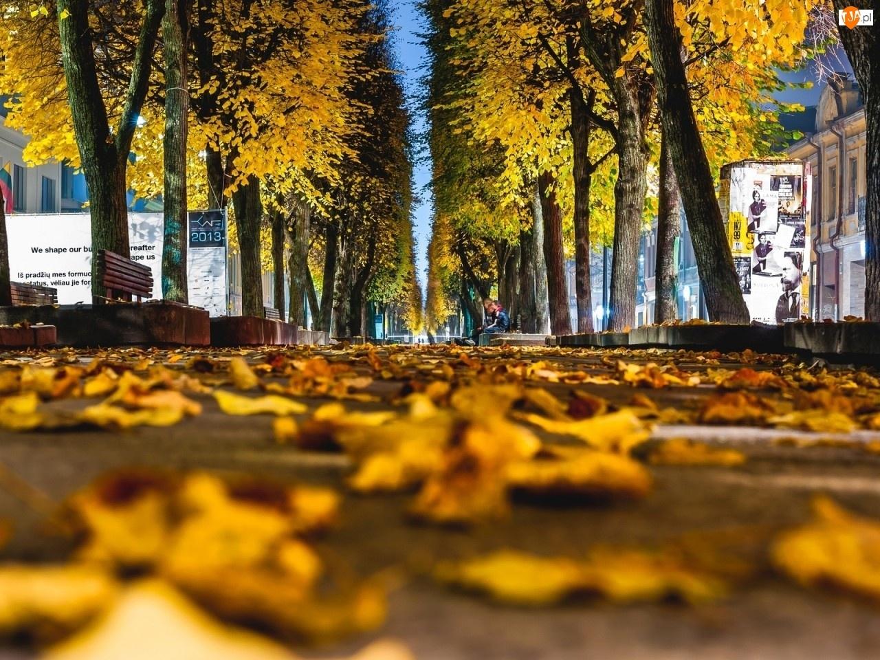 Liście, Jesień, Drzewa