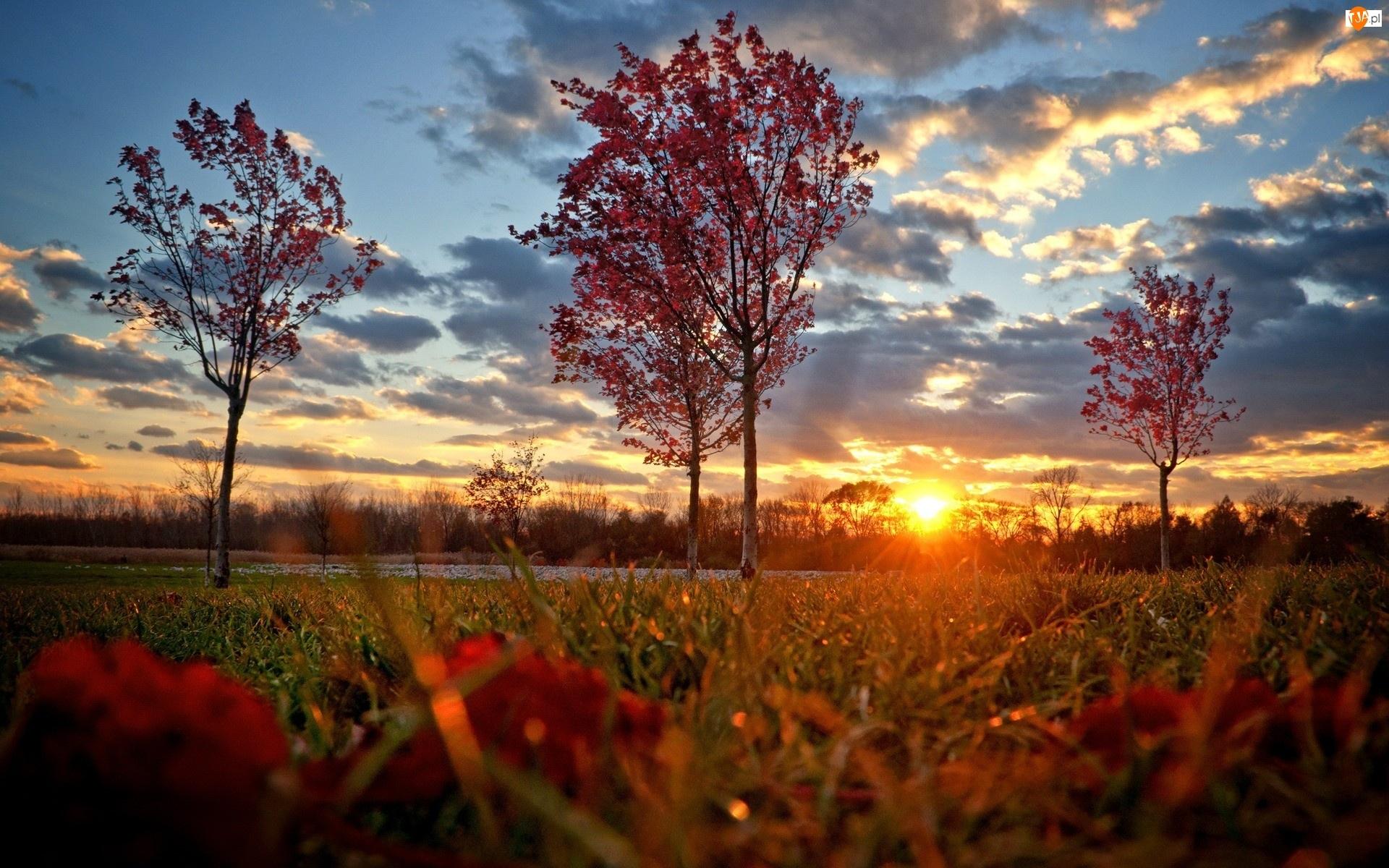 Łąka, Zachód Słońca, Drzewa, Chmury