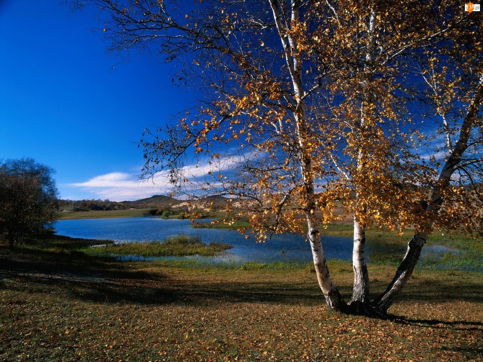 Jesień, Brzoza, Jezioro, Przyroda