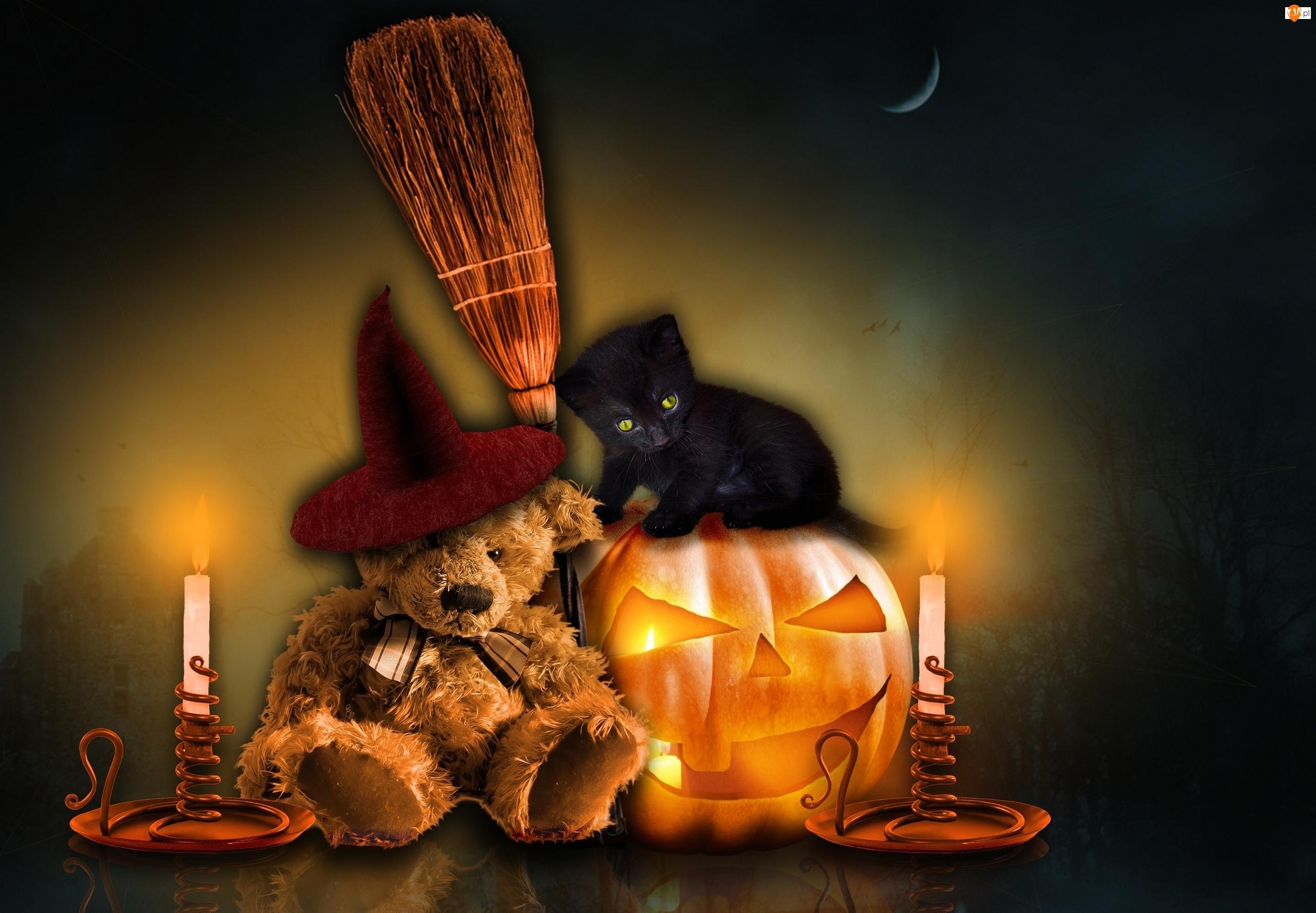 Dynia, Halloween, Miś, Kot, Świece