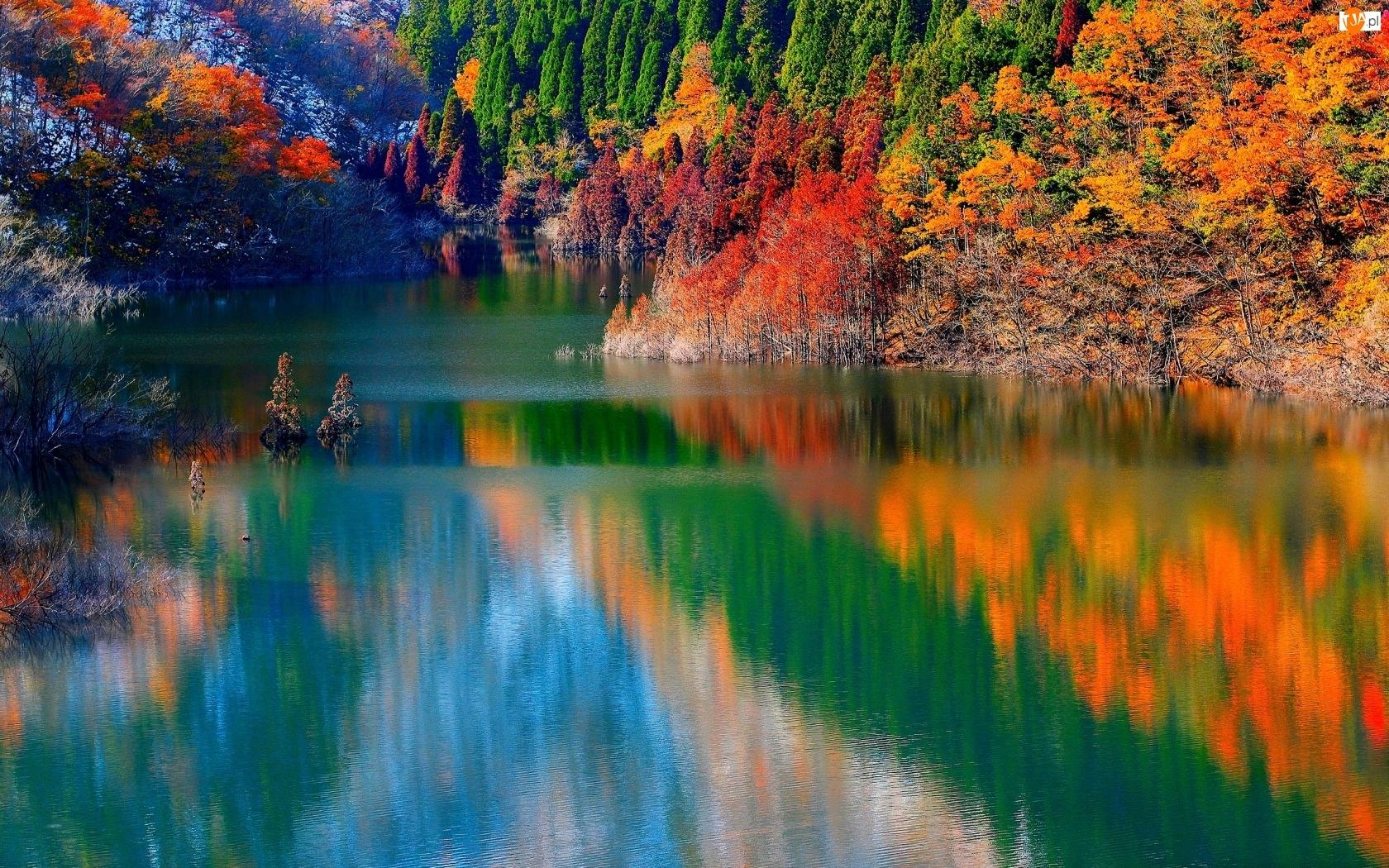 Las, Jesień, Rzeka