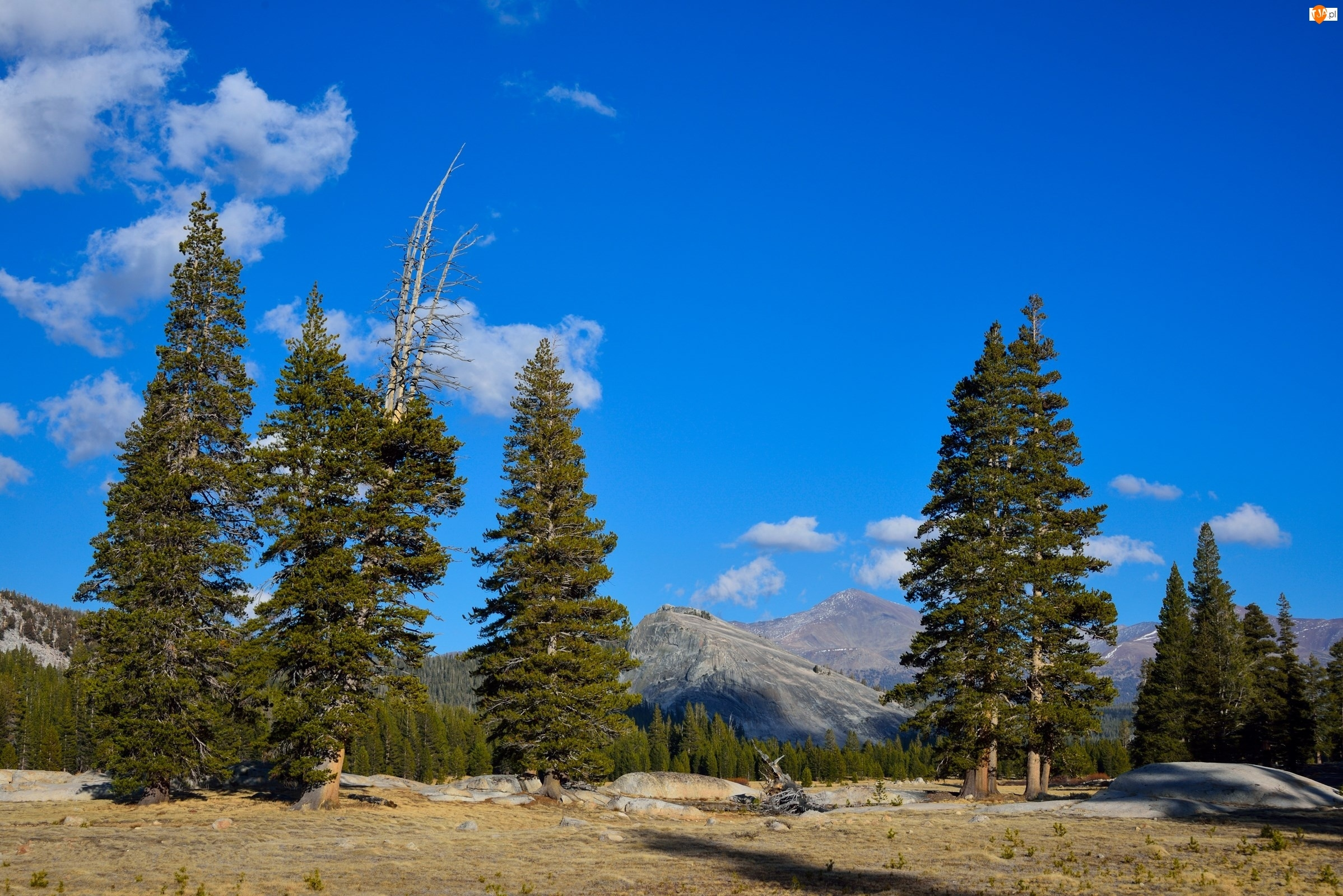 Drzewa, Stany Zjednoczone, Park Narodowy Yosemite, Stan Kalifornia, Góry