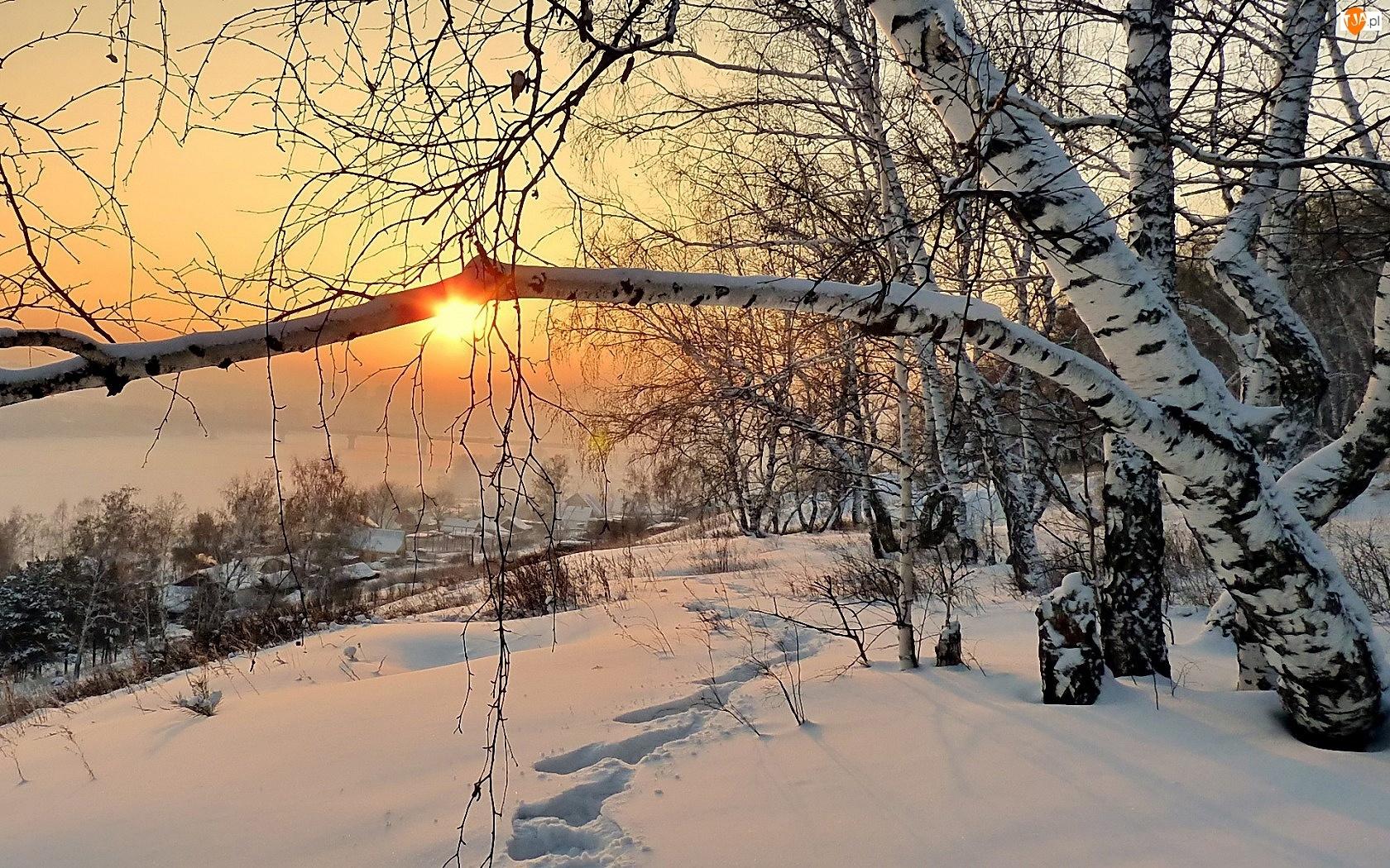 Brzoza, Zachód, Śnieg, Zima, Domki, Ślady, Słońca