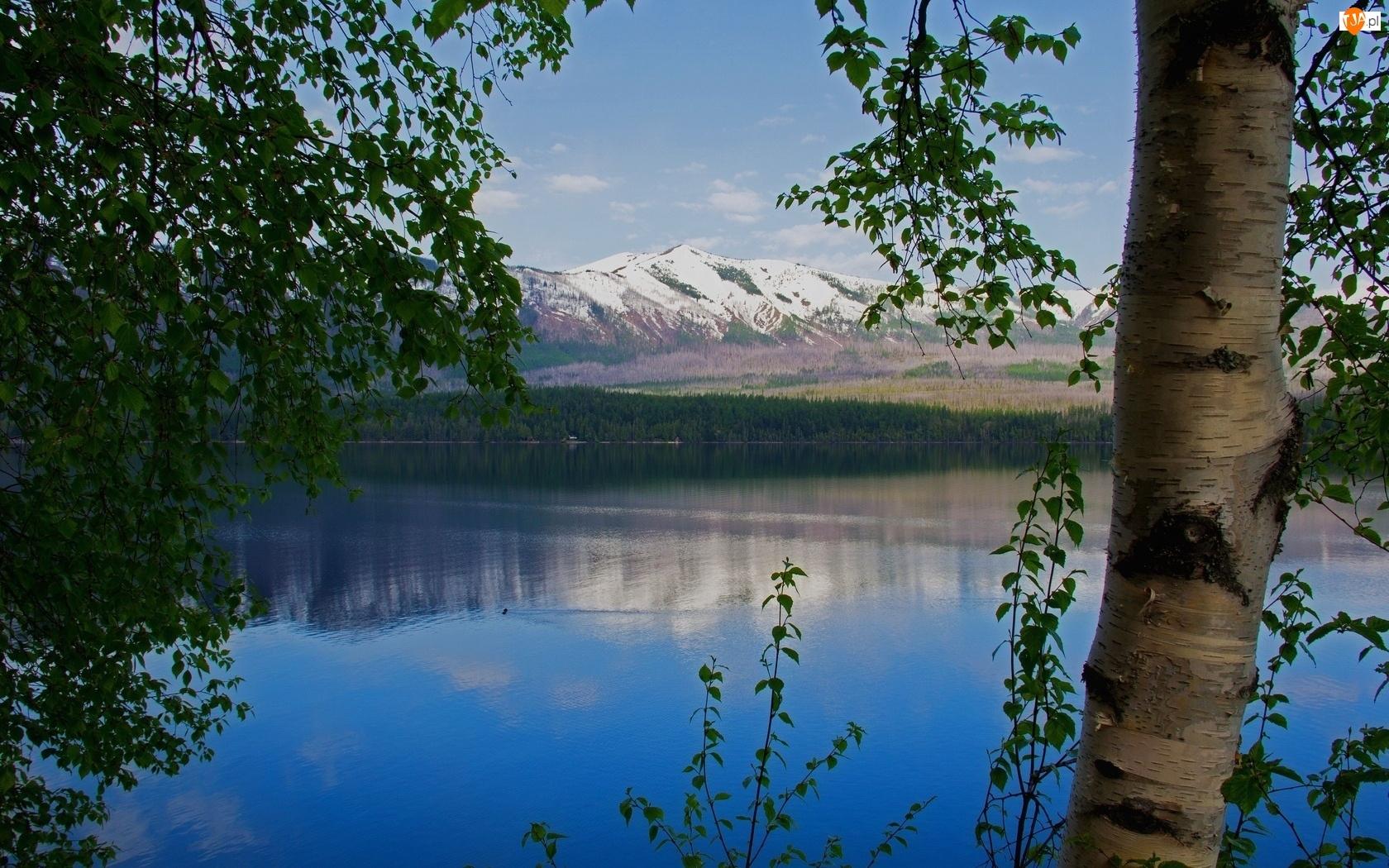 Odbicie, Jezioro, Drzewa, Góry, Brzoza