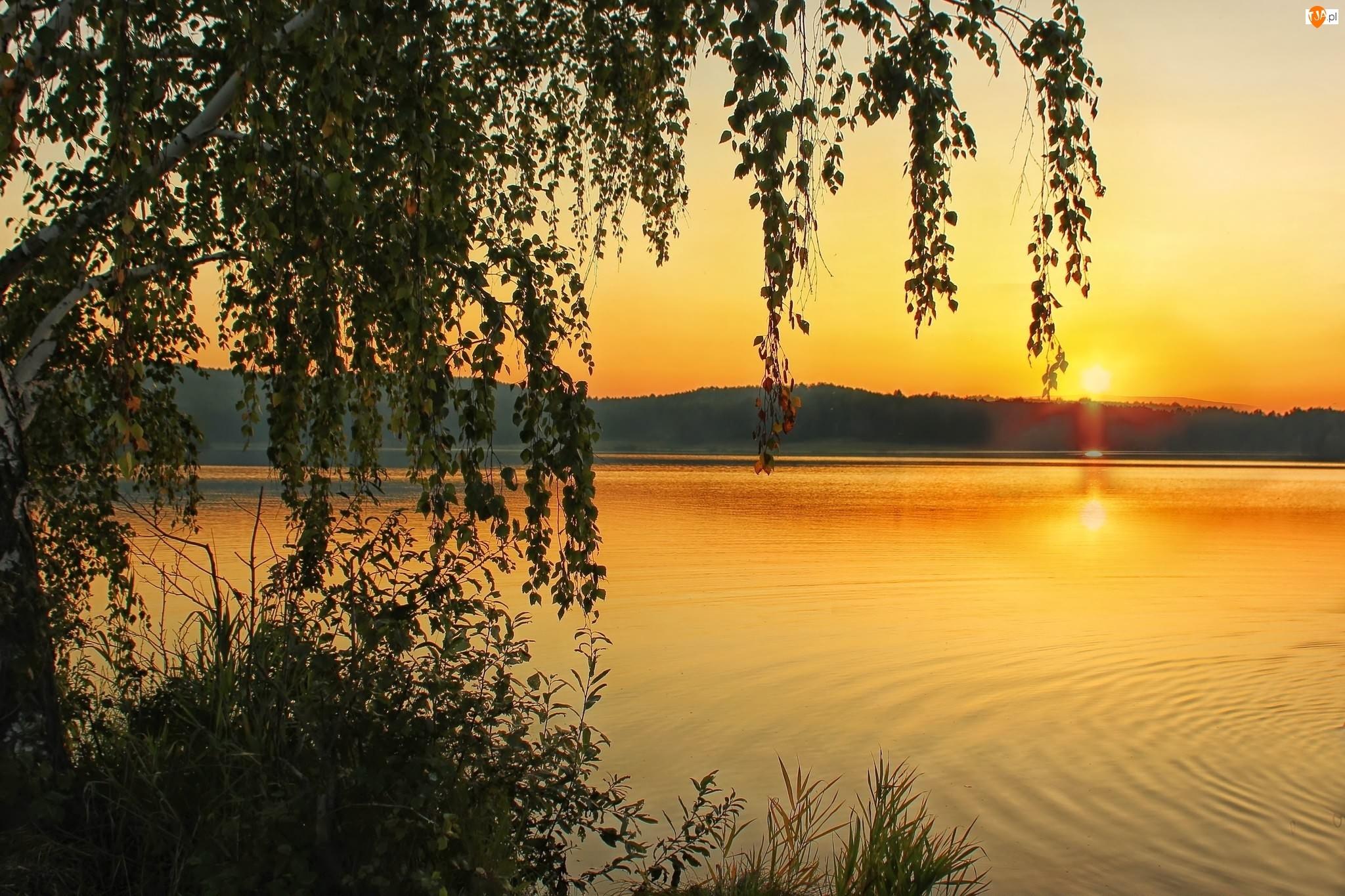 Lasy, Wscchód, Jezioro, Słońca, Brzoza, Góry