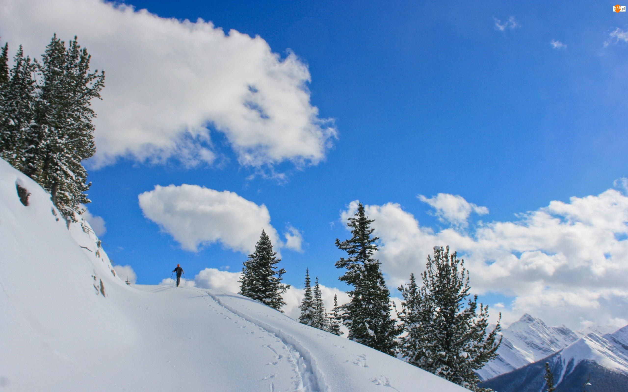 Zima, Góry, Chmury, Narciarz, Drzewa