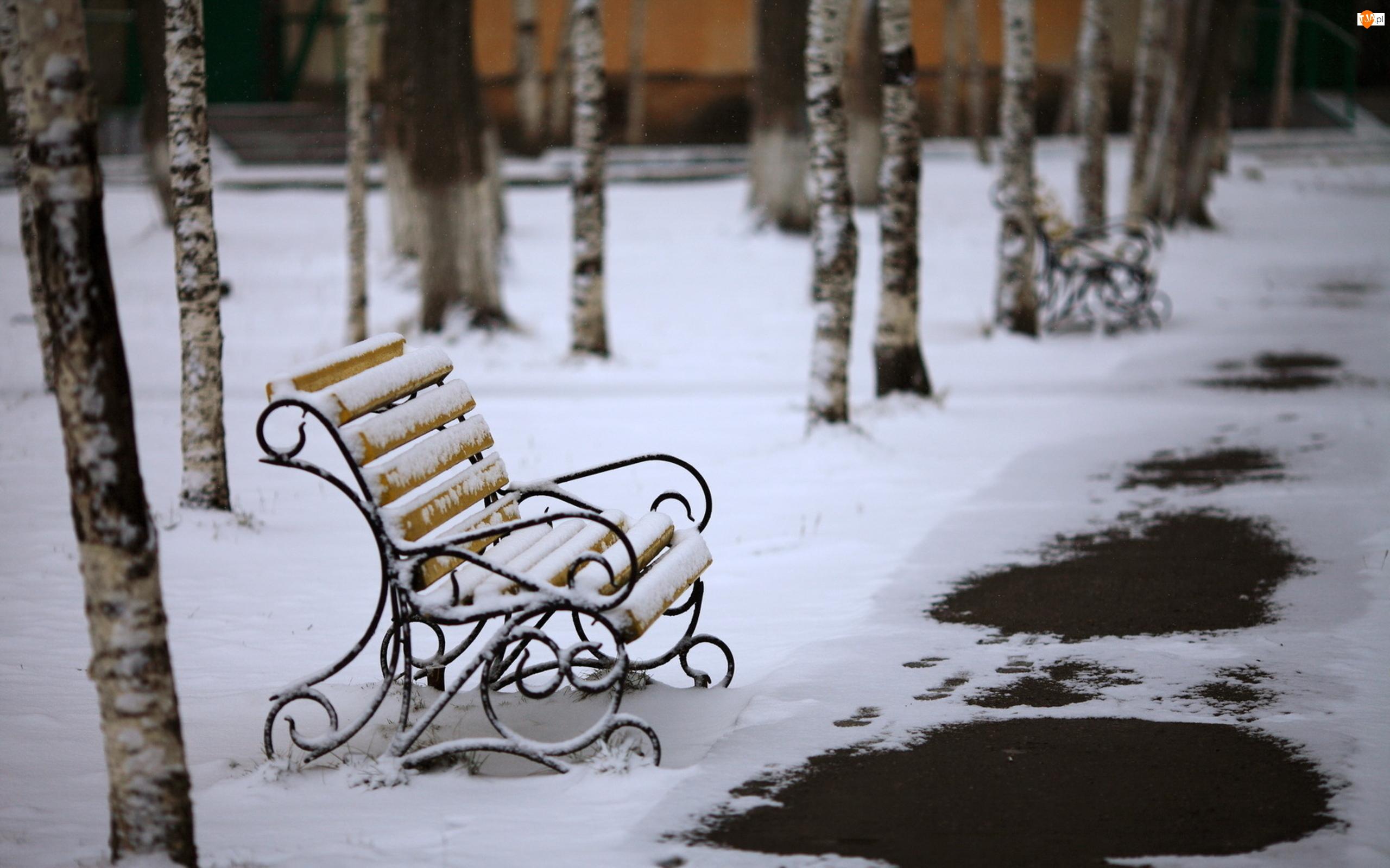 Zima, Topniejący, Park, Śnieg, Brzozy, Ławki