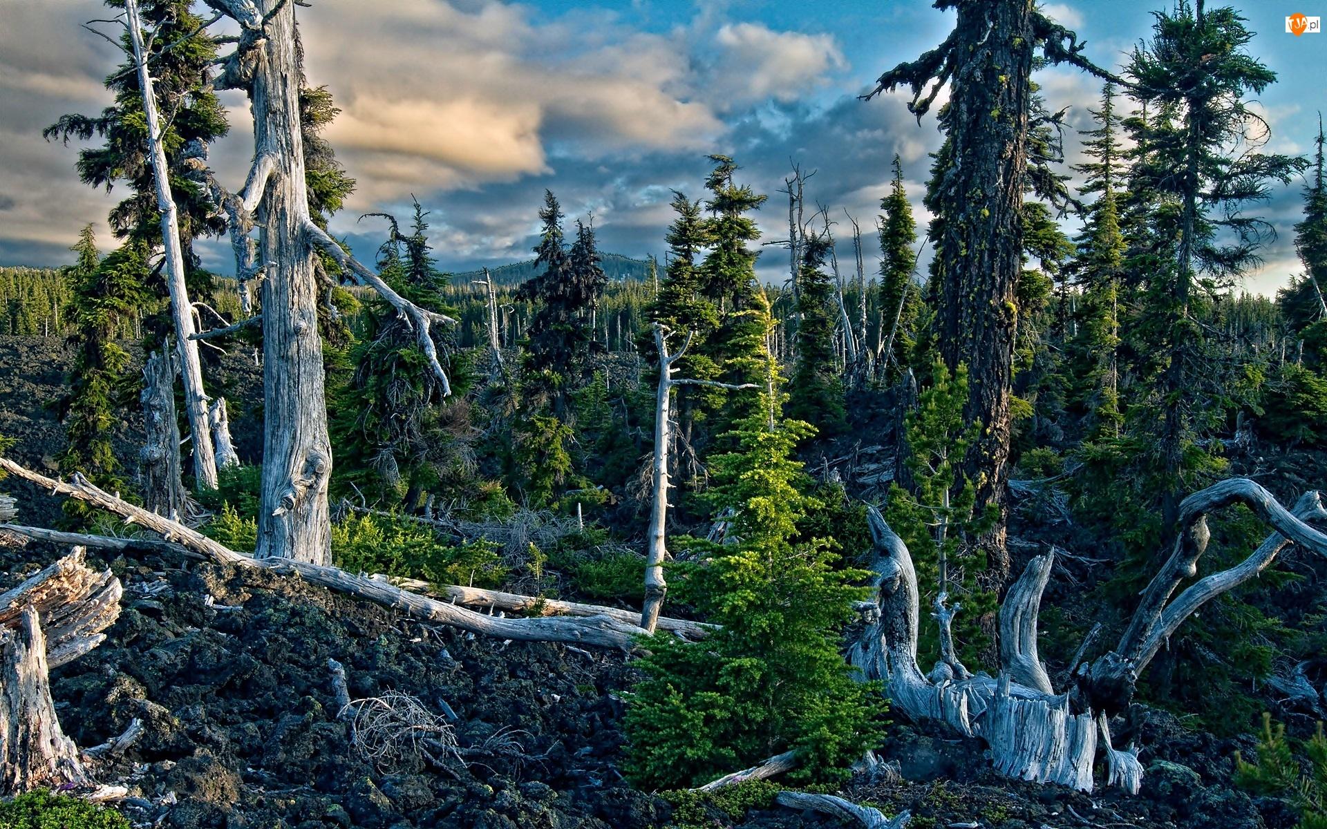 Drzewa, Światło, Las, Cień, Martwe, Chmury