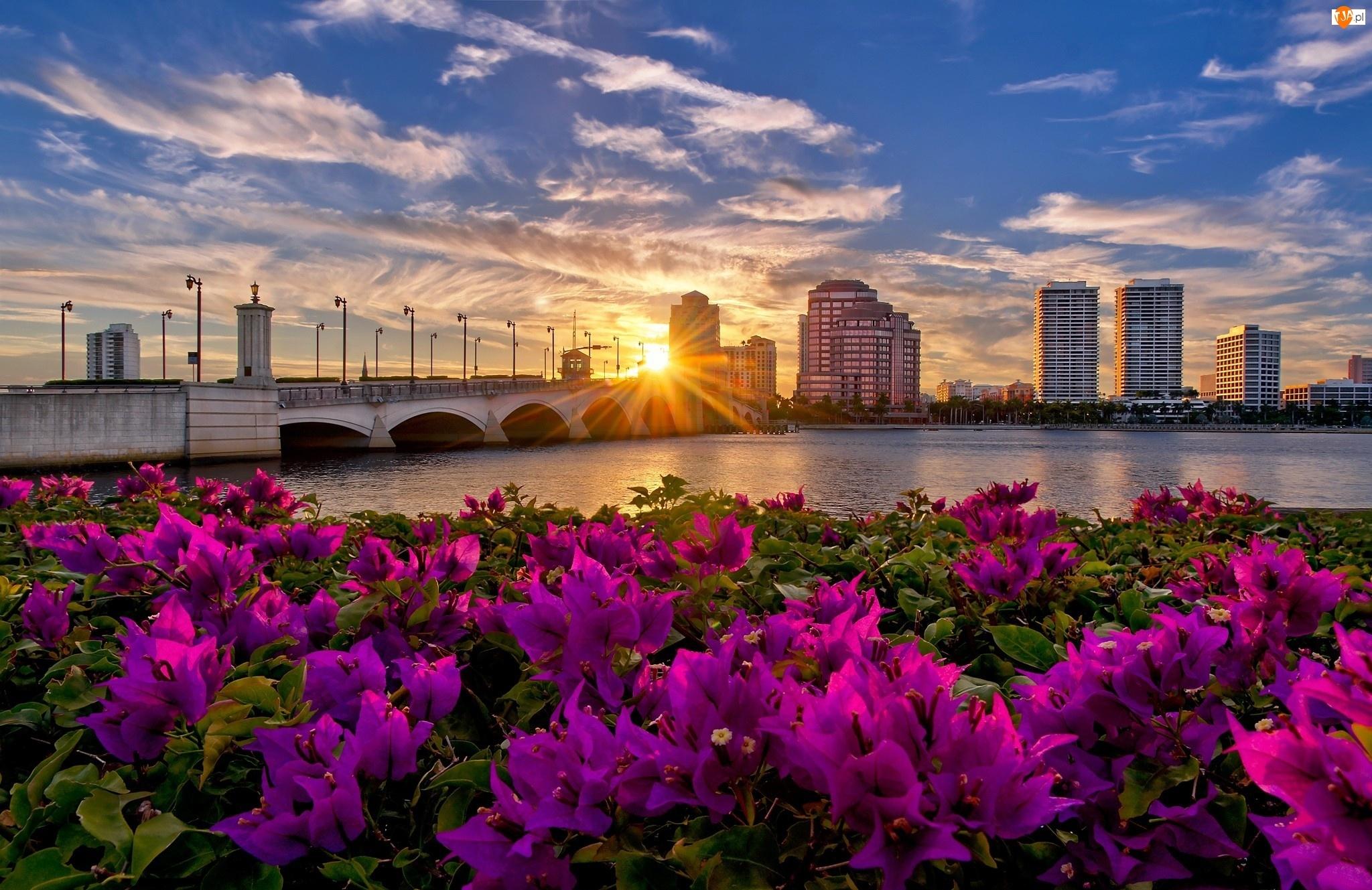 Wieżowce, Promienie, Most, Panorama, Rzeka, Miasta, Kwiaty, Słońca