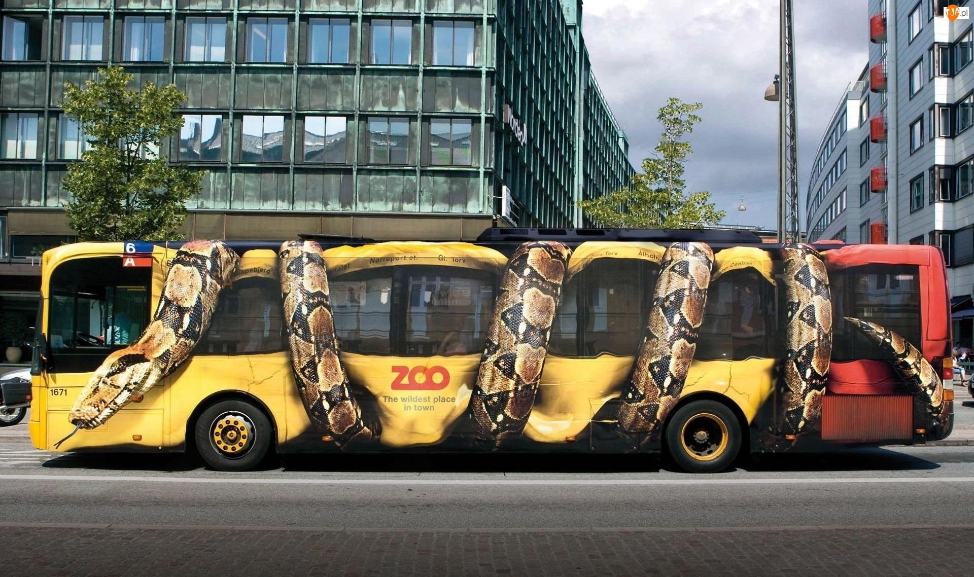 Autobus, Wąż, Ulica, Drzewa