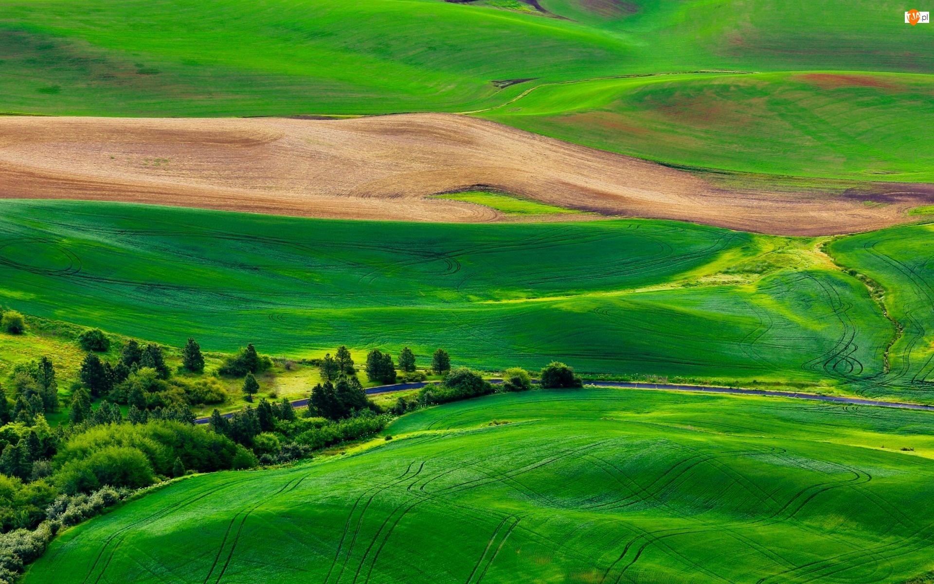 Łąki, Toskania, Droga, Włochy, Drzewa, Pola