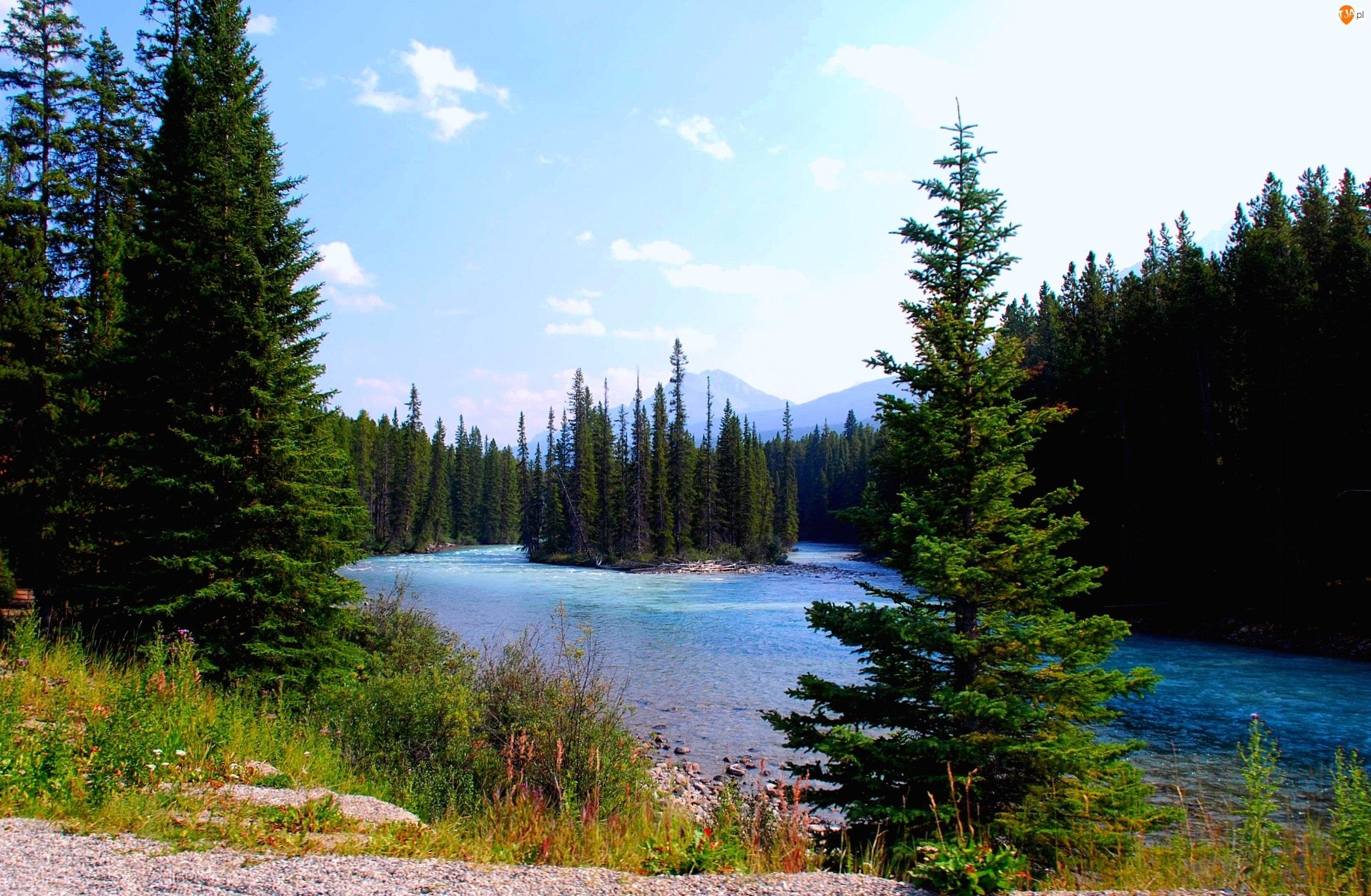 Park Narodowy Banff, Kanada Rzeka, Las