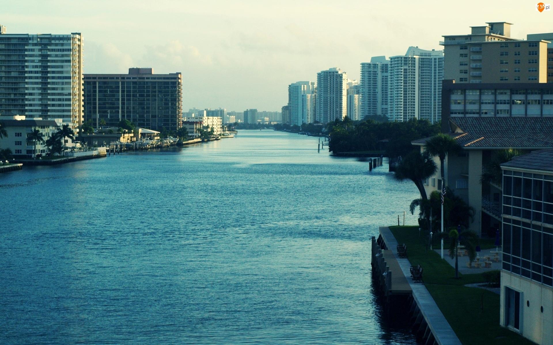 Floryda, Rzeka, Drzewa, Wieżowce, Miami