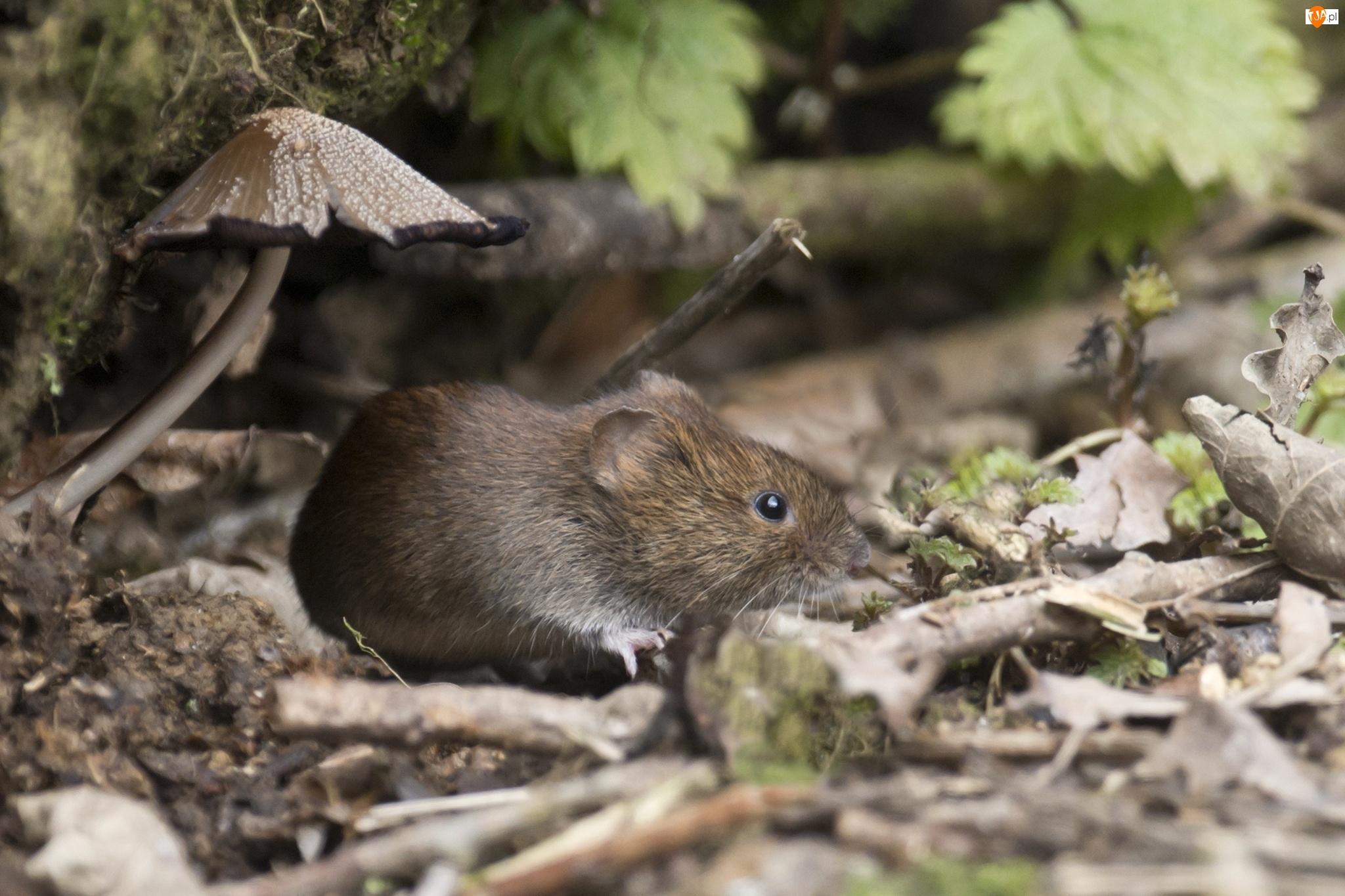 Grzyb, Mysz, Liście