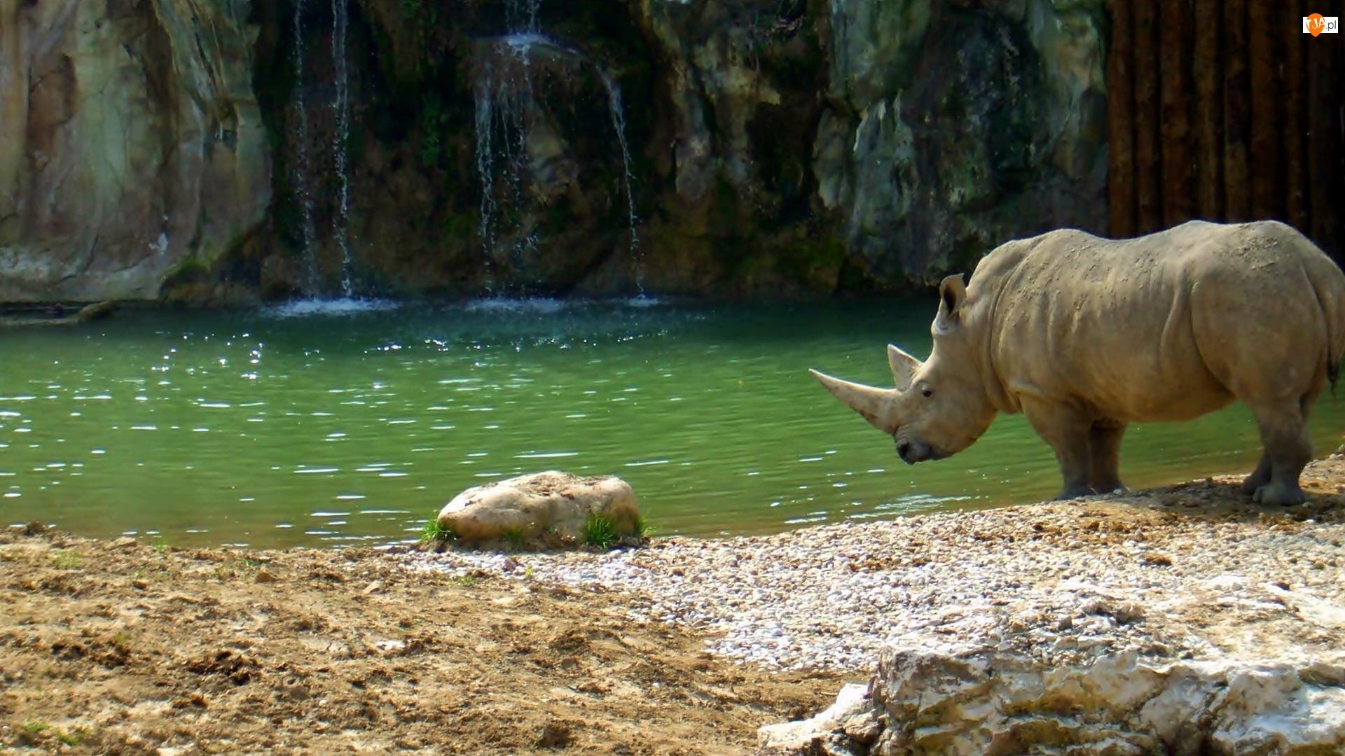Nosorożec, Rzeka, Skały, Sand, Wodospad
