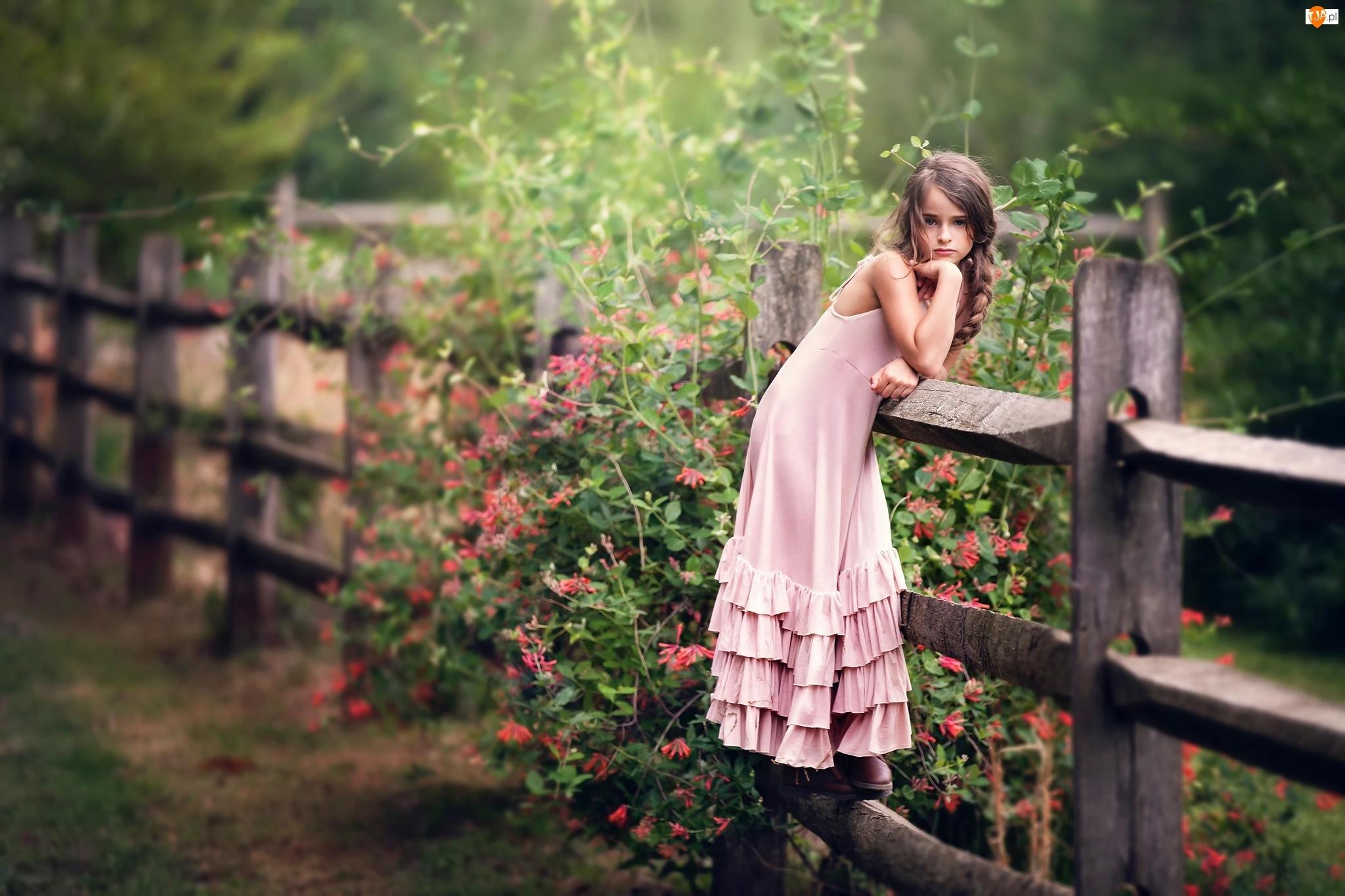 Ogródek, Ścieżka, Różowa, Ogrodzenie, Dziewczynka, Pelargonie, Sukienka, Płot