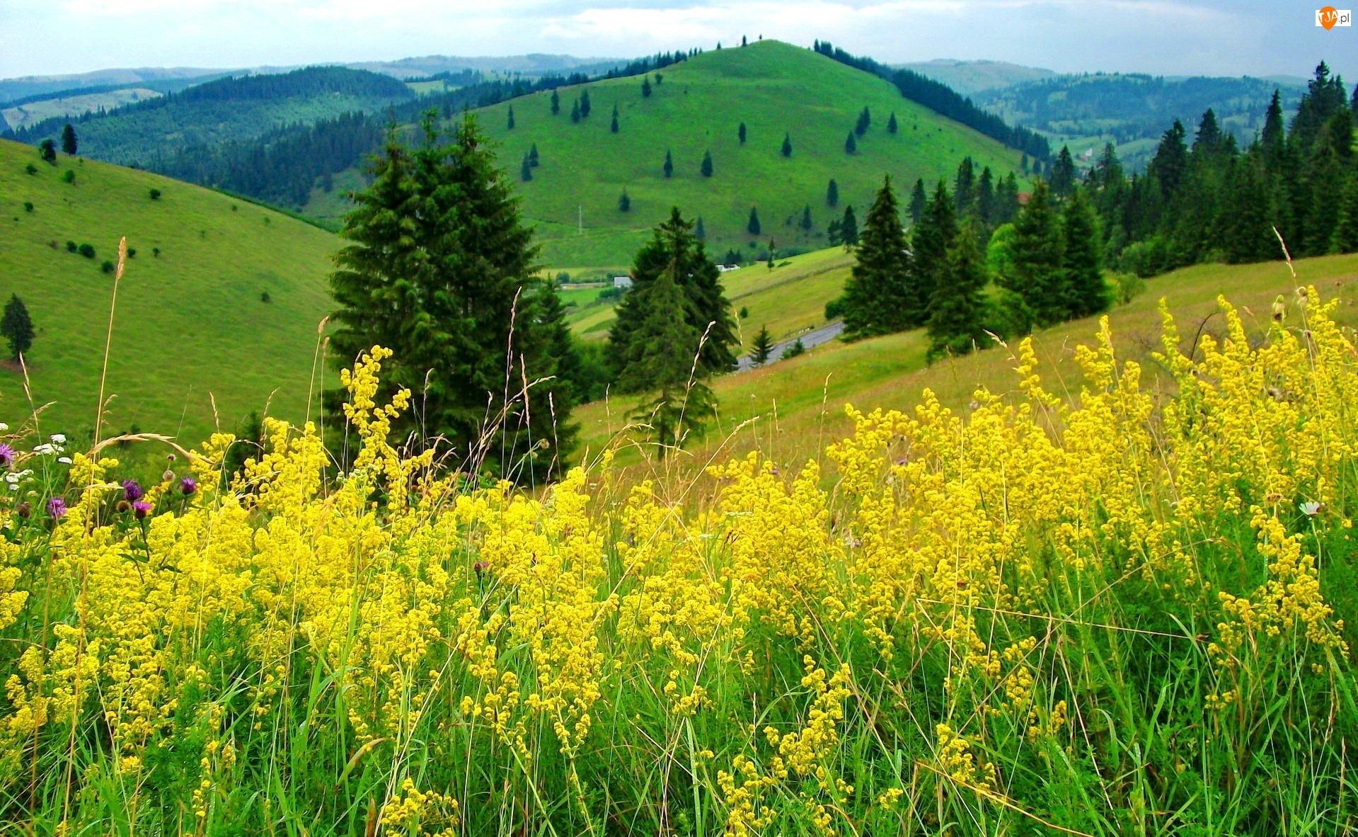 Łąka, Wzgórza