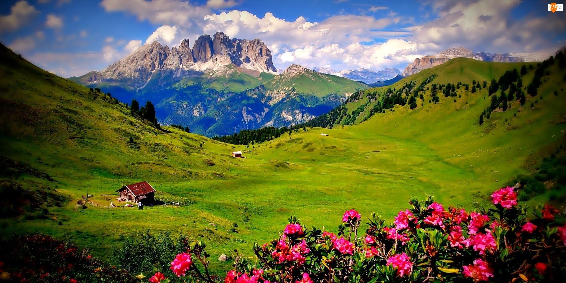 Obłoki, Kwitnące, Góry, Rododendrony, Łąki, Zagroda