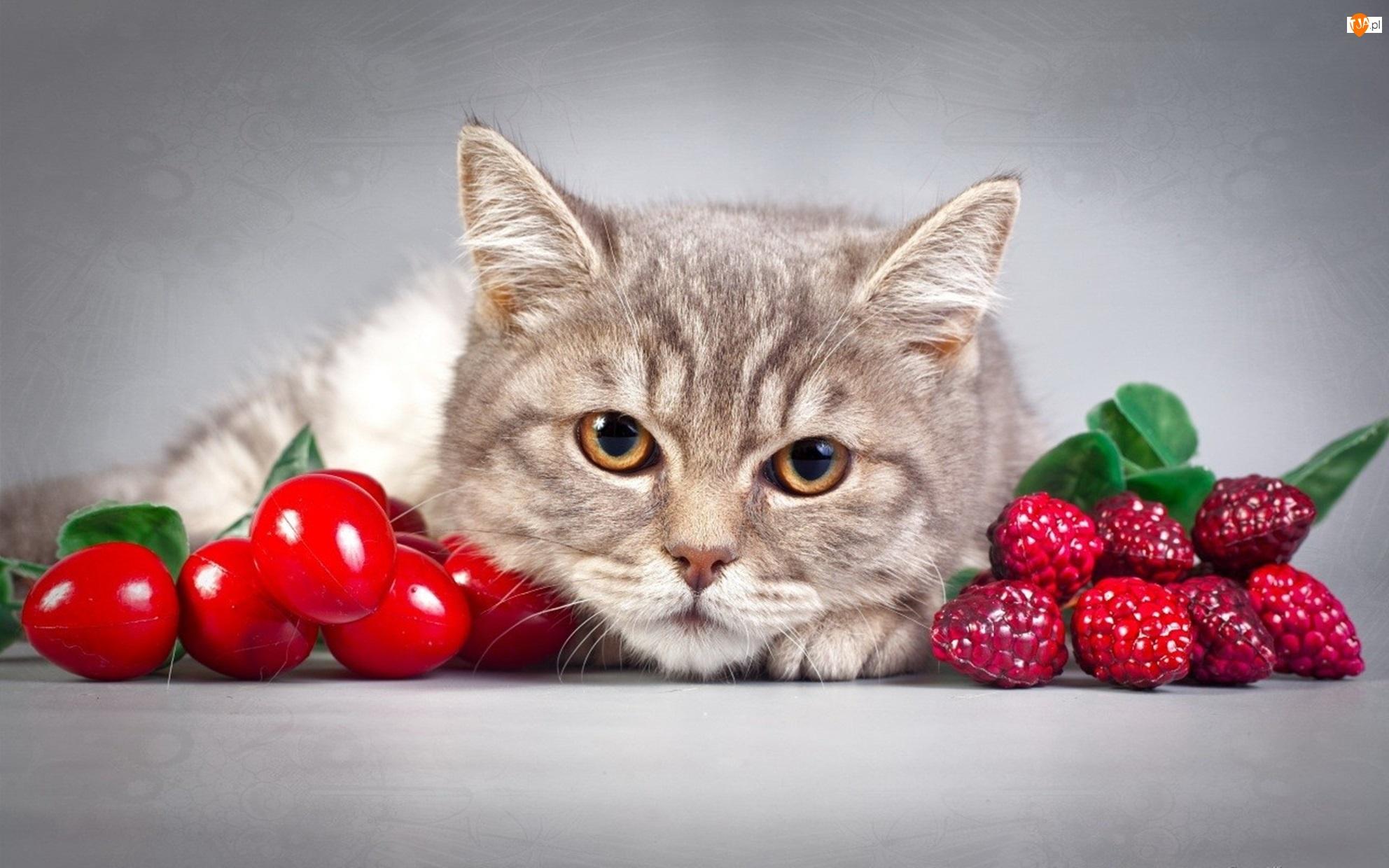 Kot, Owoce