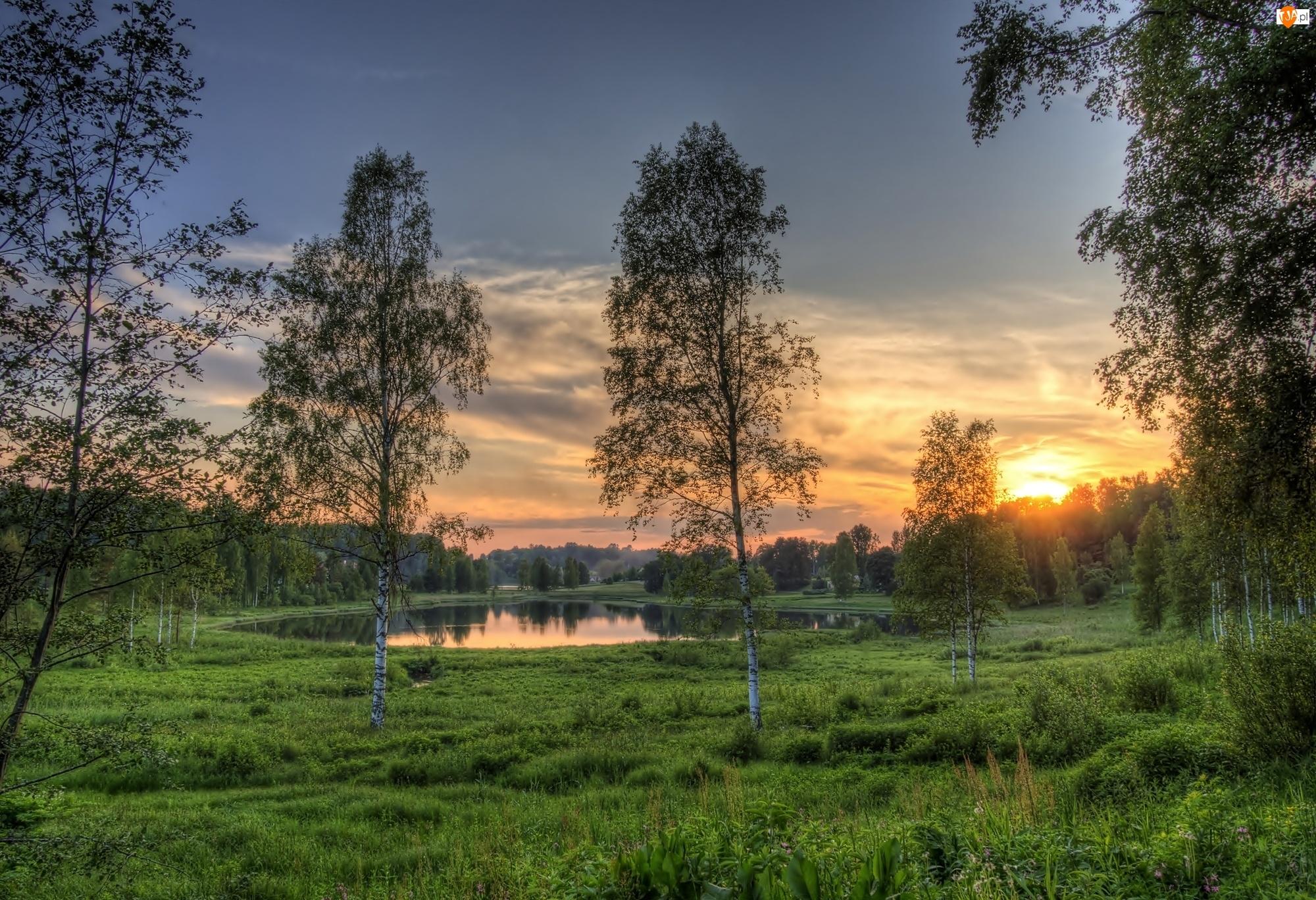 Słońca, Drzewa, Park, Brzozy, Zachód, Staw