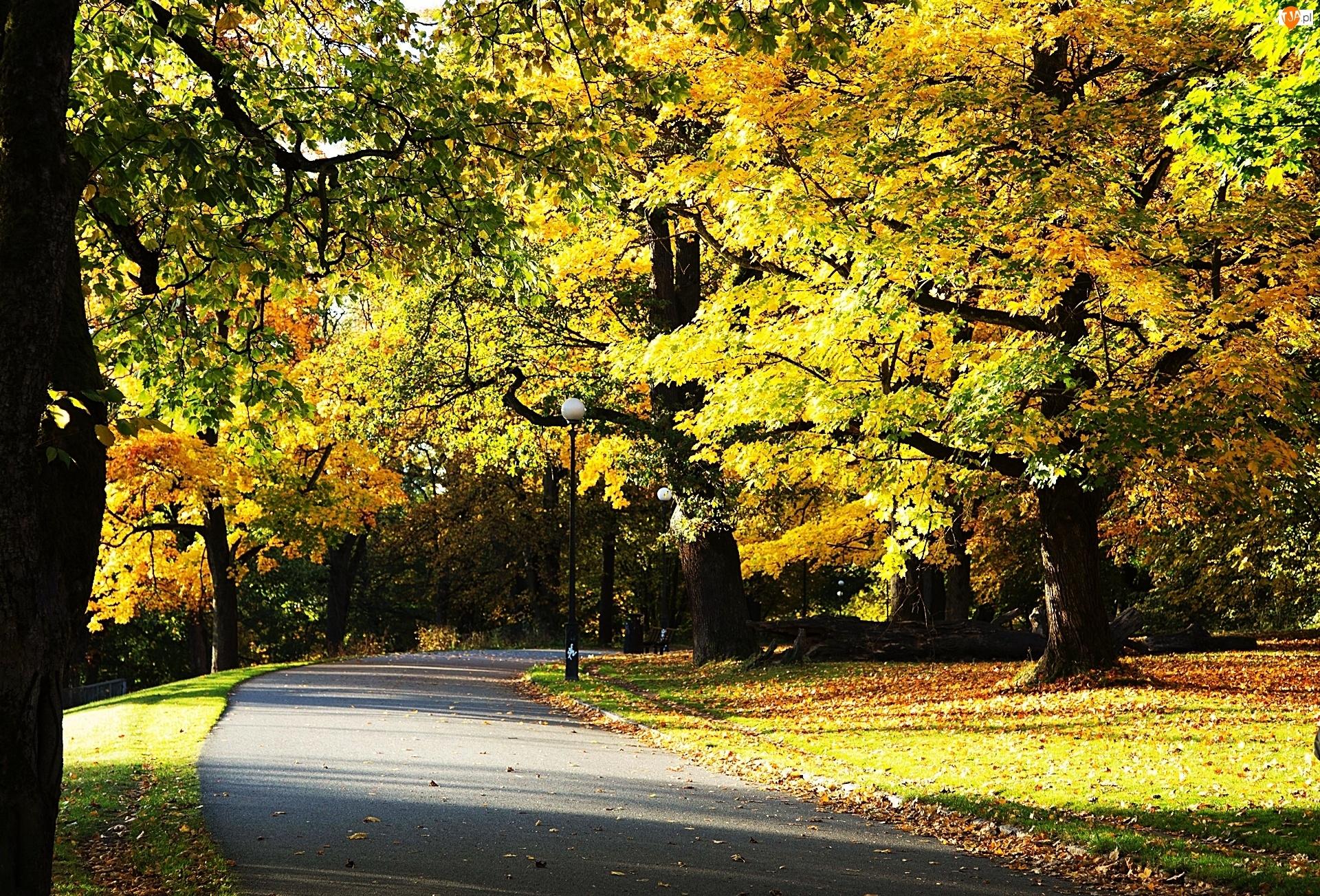 Droga, Park, Alejka, Jesień, Drzewa