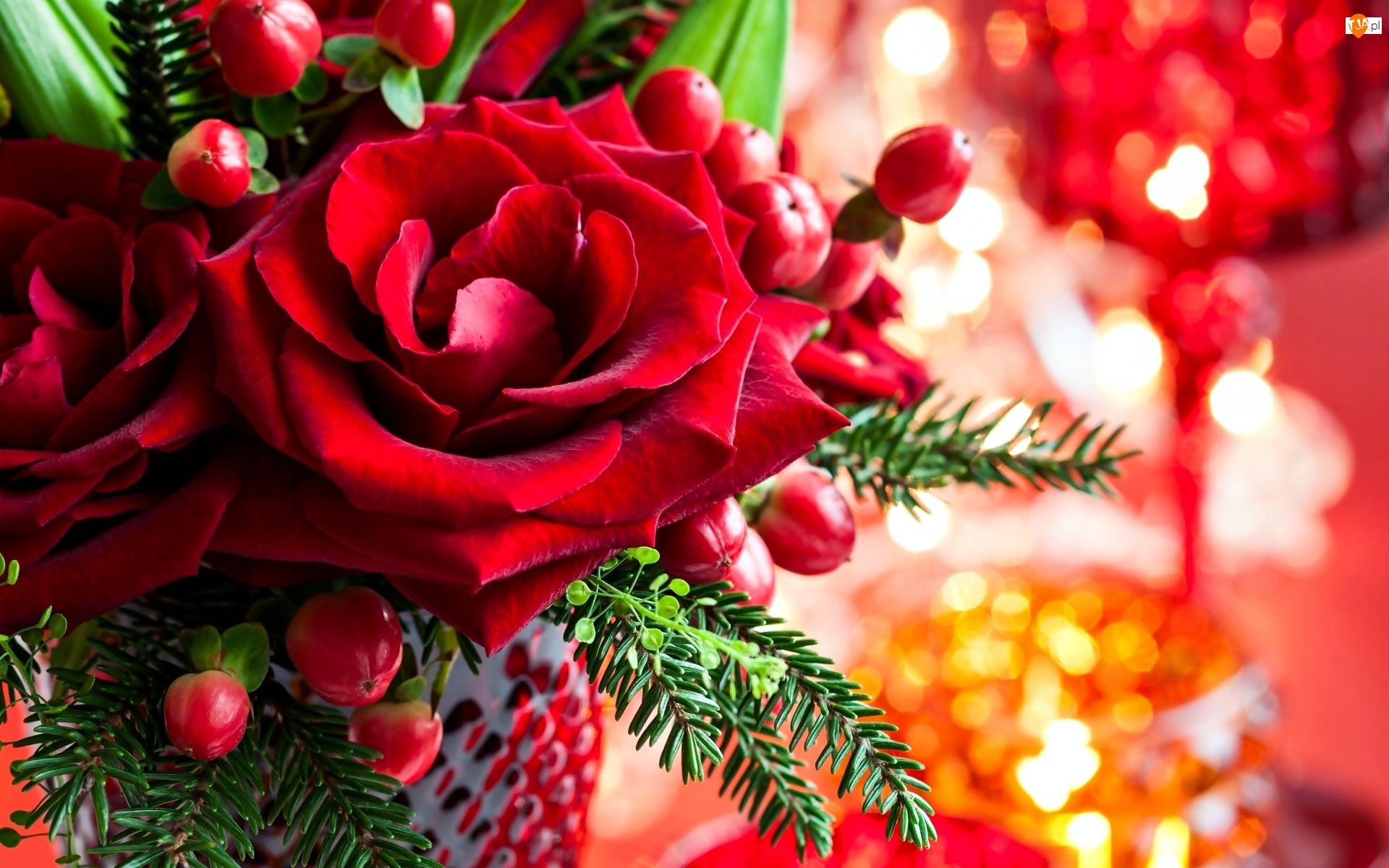 Róża, Dekoracja, Czerwona