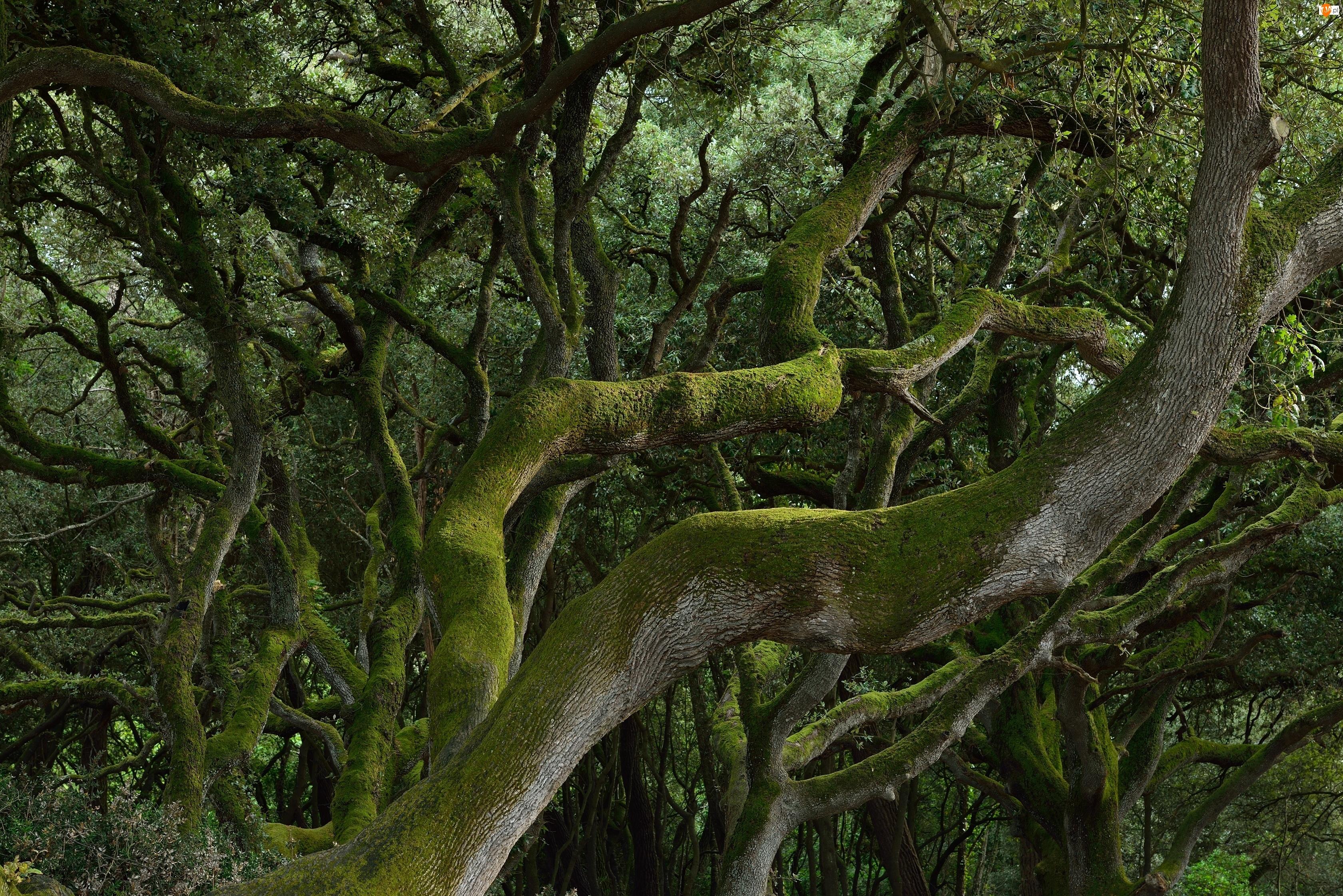 Mech, Dżungla, Drzewa