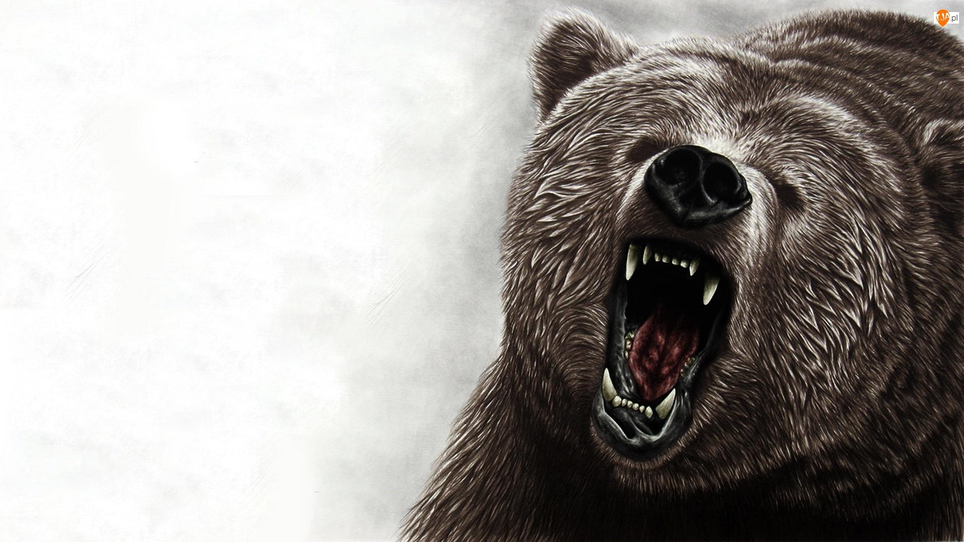 эндоскопическое картинки компьютерные морды медведя уже так всё