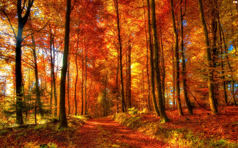 Ścieżka, Jesień, Las