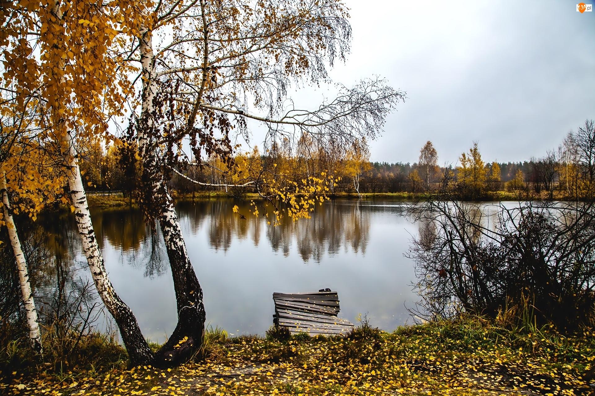 Jesień, Pomost, Rzeka, Brzoza