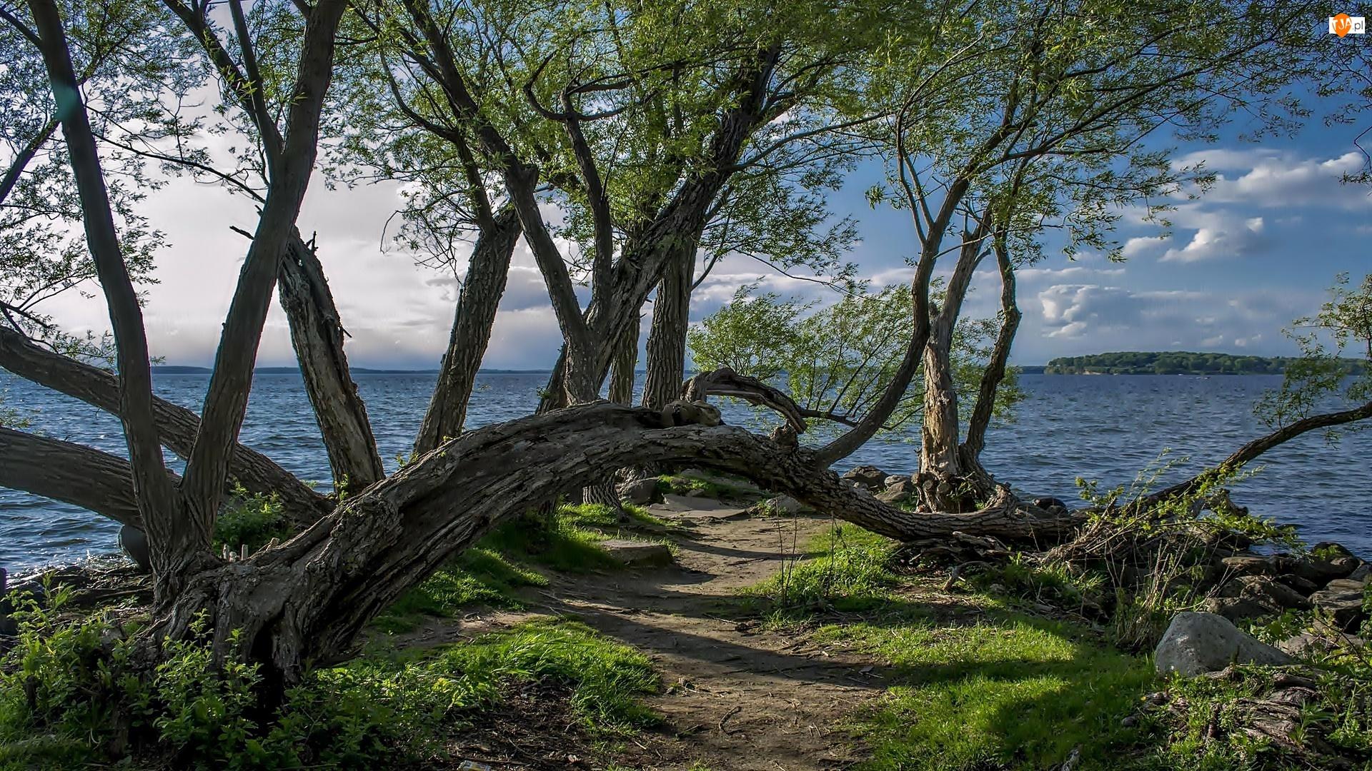 Jezioro, Ścieżka, Pochylone, Drzewa